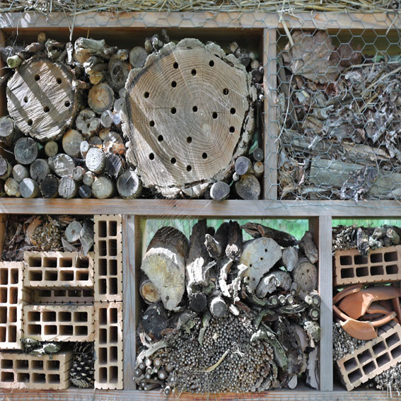 Bug hotel activity cultivation street community school gardens network images 5