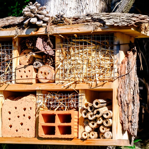 Bug hotel activity cultivation street community school gardens network images 6