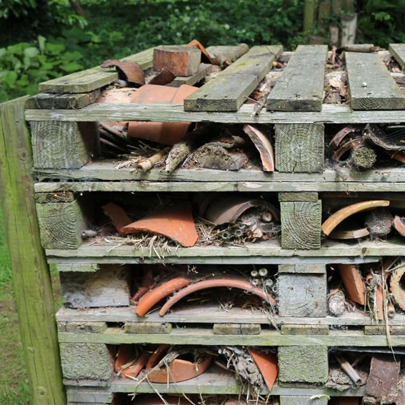 Bug hotel activity cultivation street community school gardens network images 8