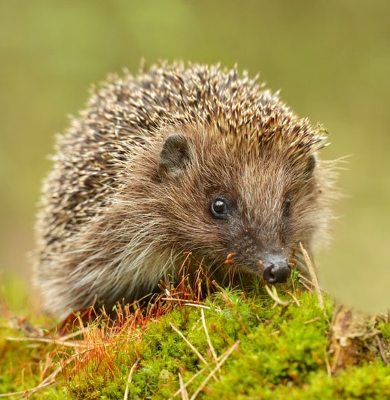 Hedgehog house image body culytivation street 5 tips attracting wildlife to your garden hedgehog