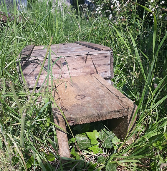Hedgehog house image body culytivation street 5 tips attracting wildlife to your garden
