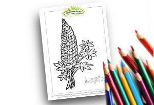 Resource Page Image Colouring page Cultivation Street (1)