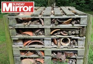 Behinf the Sunday Mirror Blog Post feature image school wildlife garden