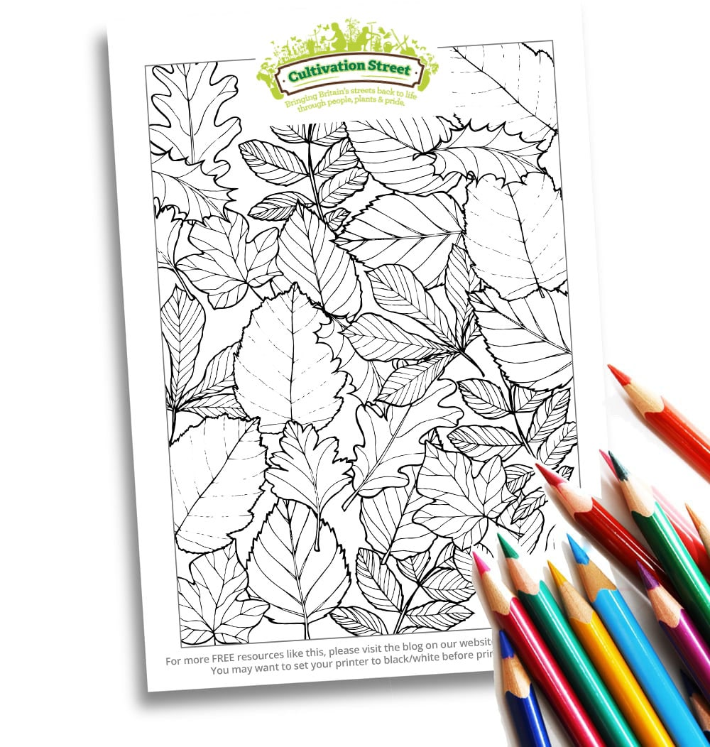 Body-Image- Colouring Page Cultivation-Street Autumn
