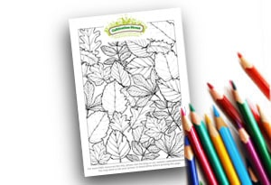Feature Image Colouring page Cultivation Street Autumn Leaves