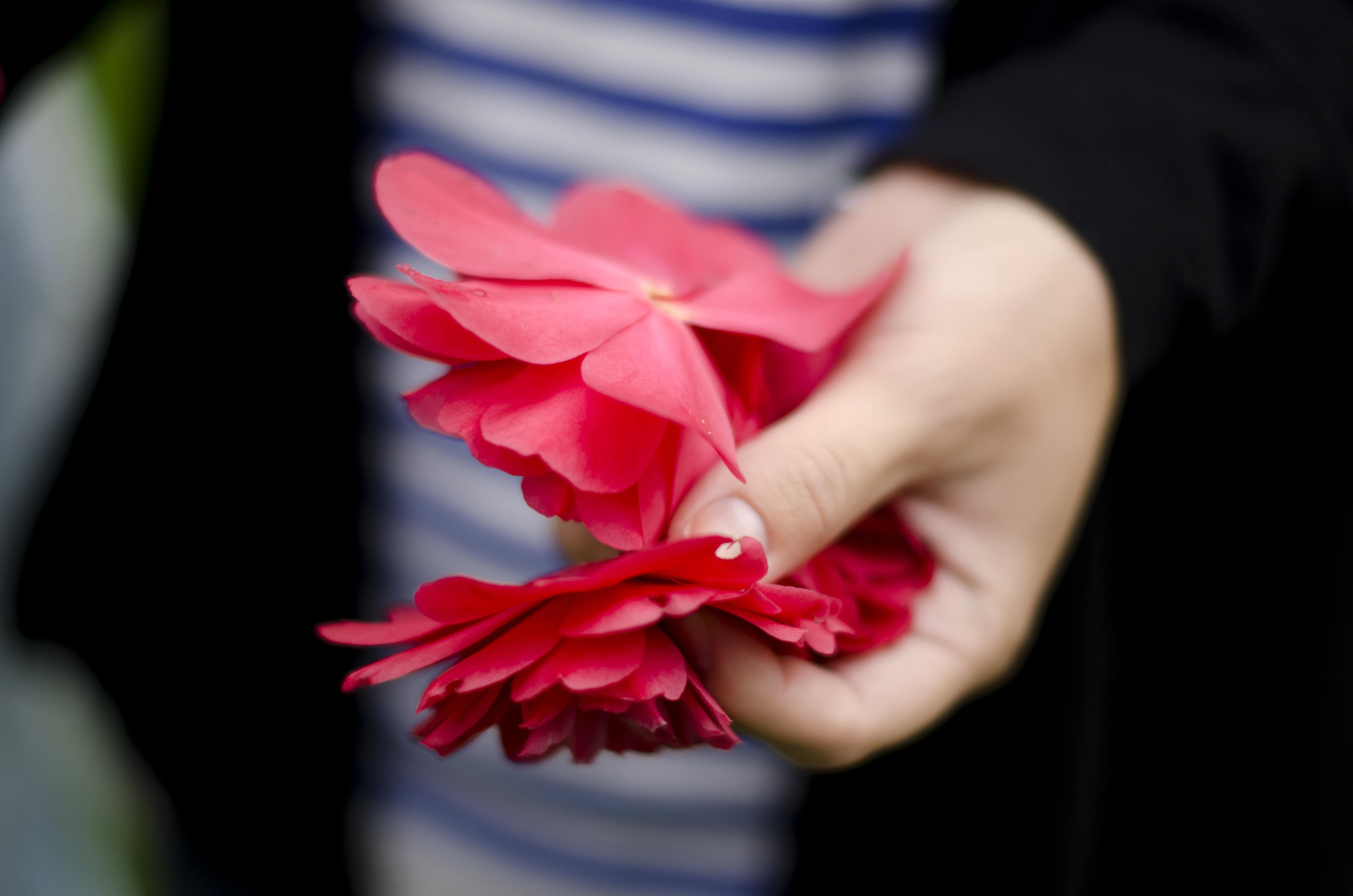 A handful of petals