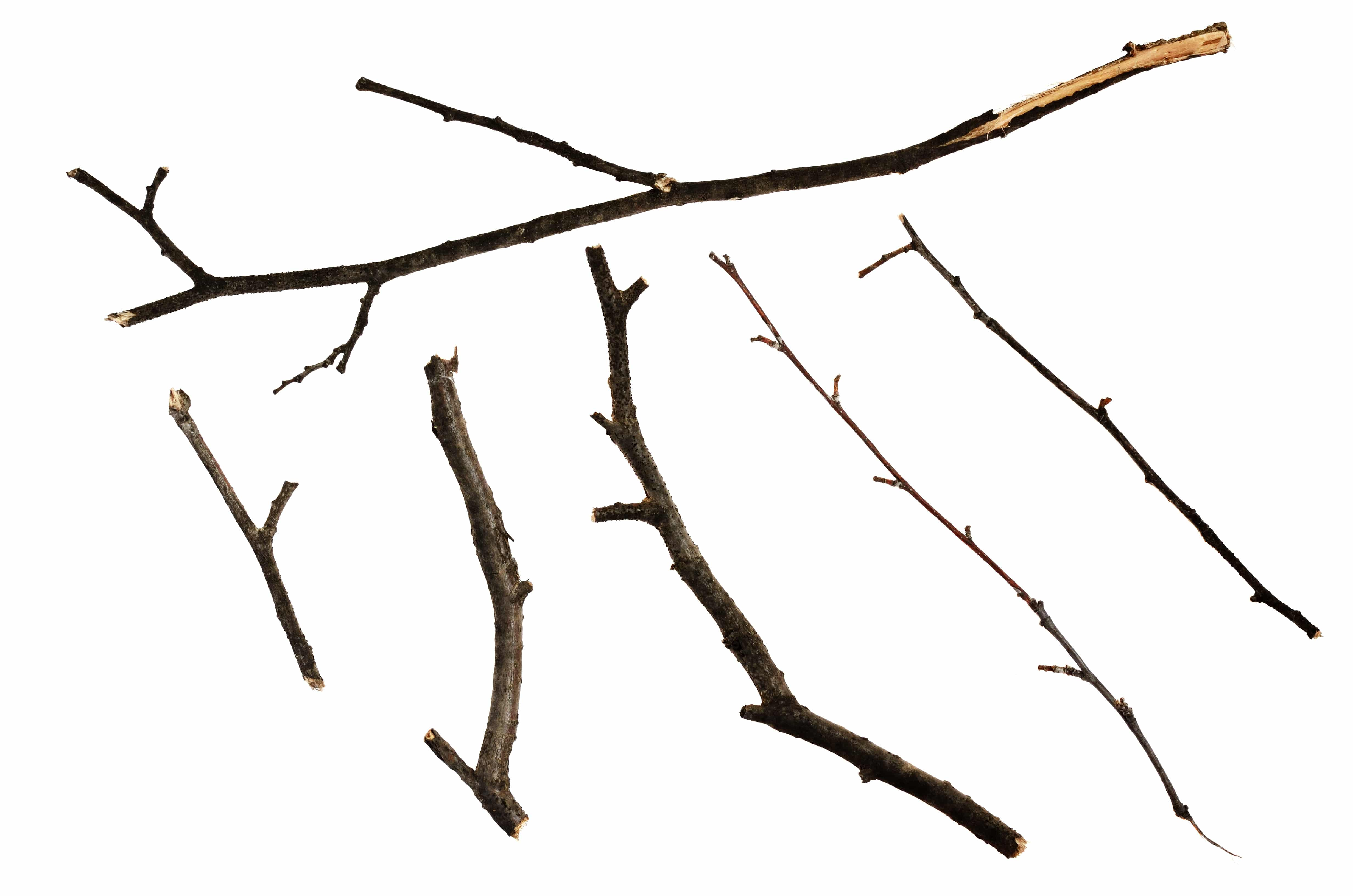 Set of dry twigs isolated on white
