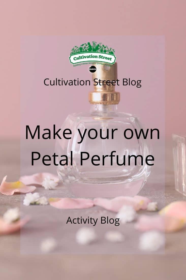 Copy of CultivationStreet Blog (3)