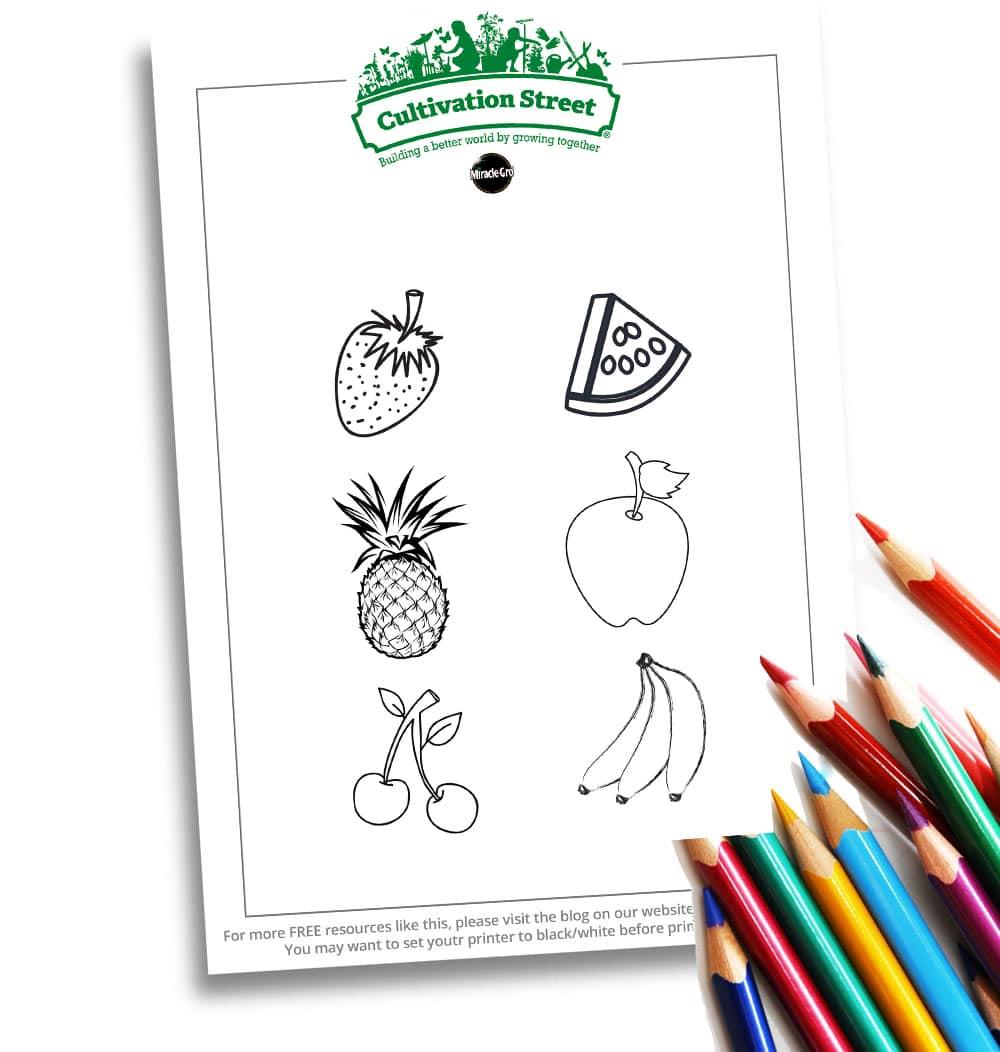 Fruit Web Image