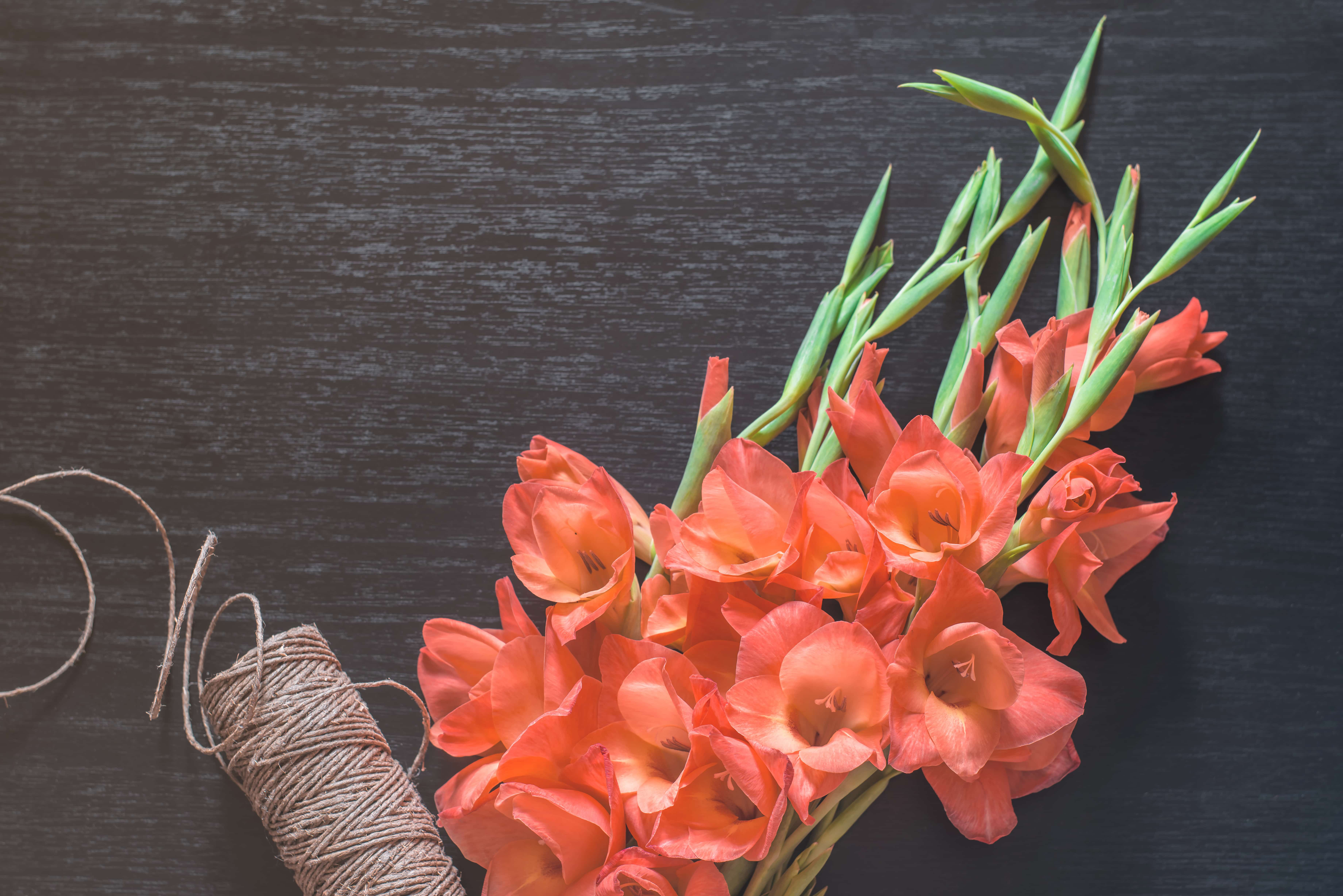 Orange gladiolus on tinted black background, top view. Floral rope for bouquets on wooden table. Flat lay. Nature concept. A place for your inscription. Background for site design, landing or blog.
