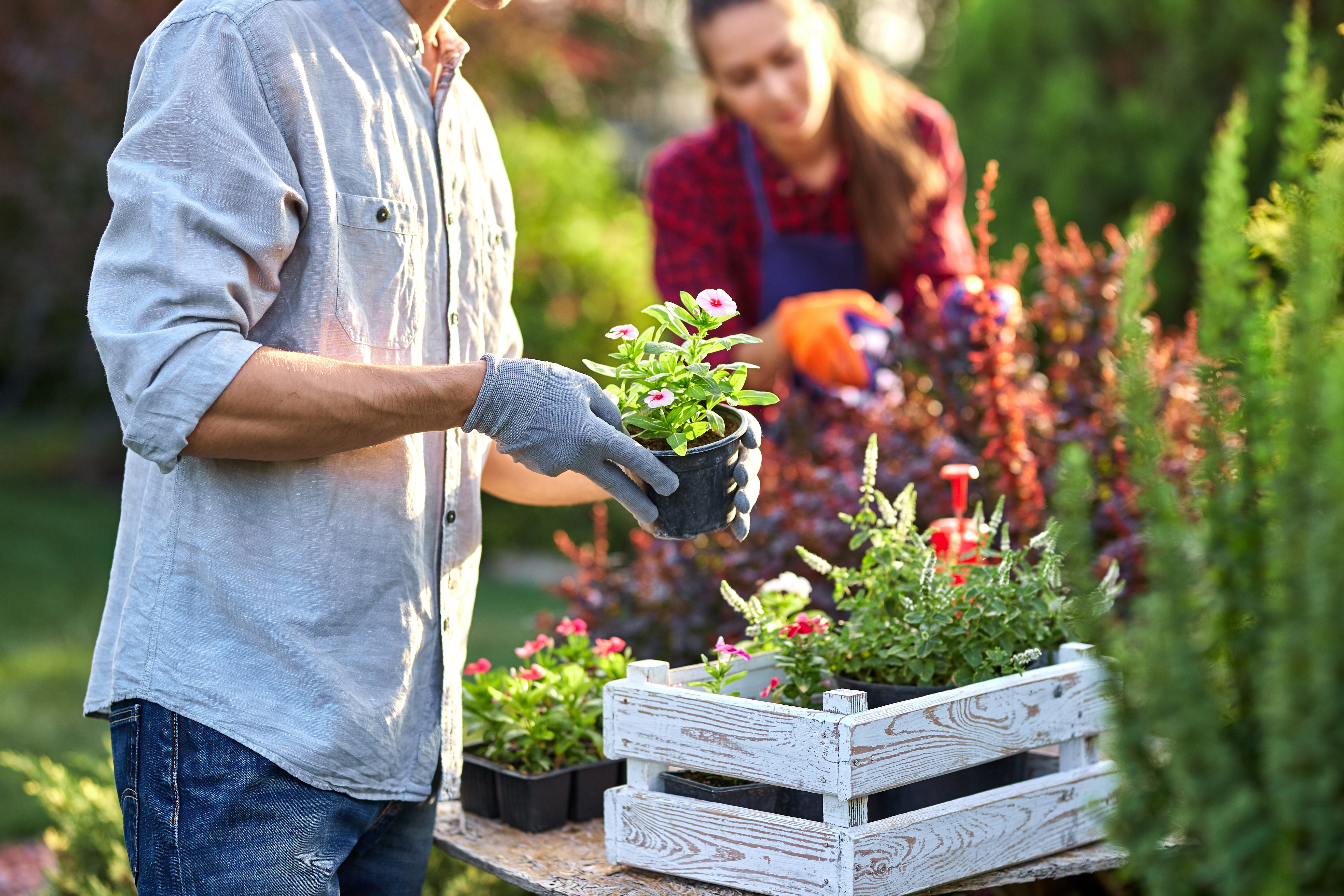 Guy gardener in garden gloves puts the pots with seedlings in the white wooden box on the table and a girl prunes plants in the wonderful nursery-garden on a sunny day. .
