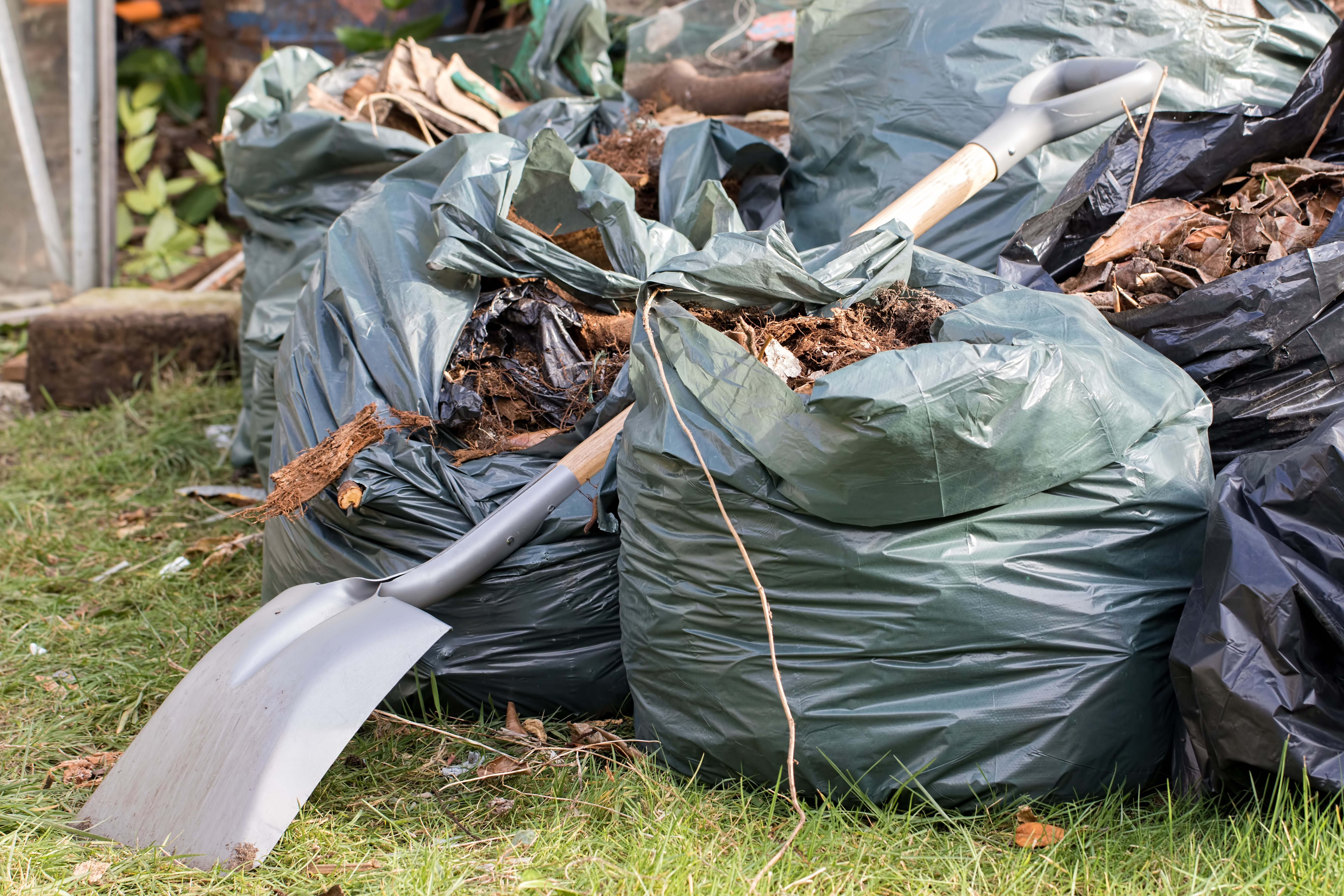 Garden waste. Brown leaves and rubbish collected from a gardening tidy up. Spade over sacks of garden refuse on a lawn.