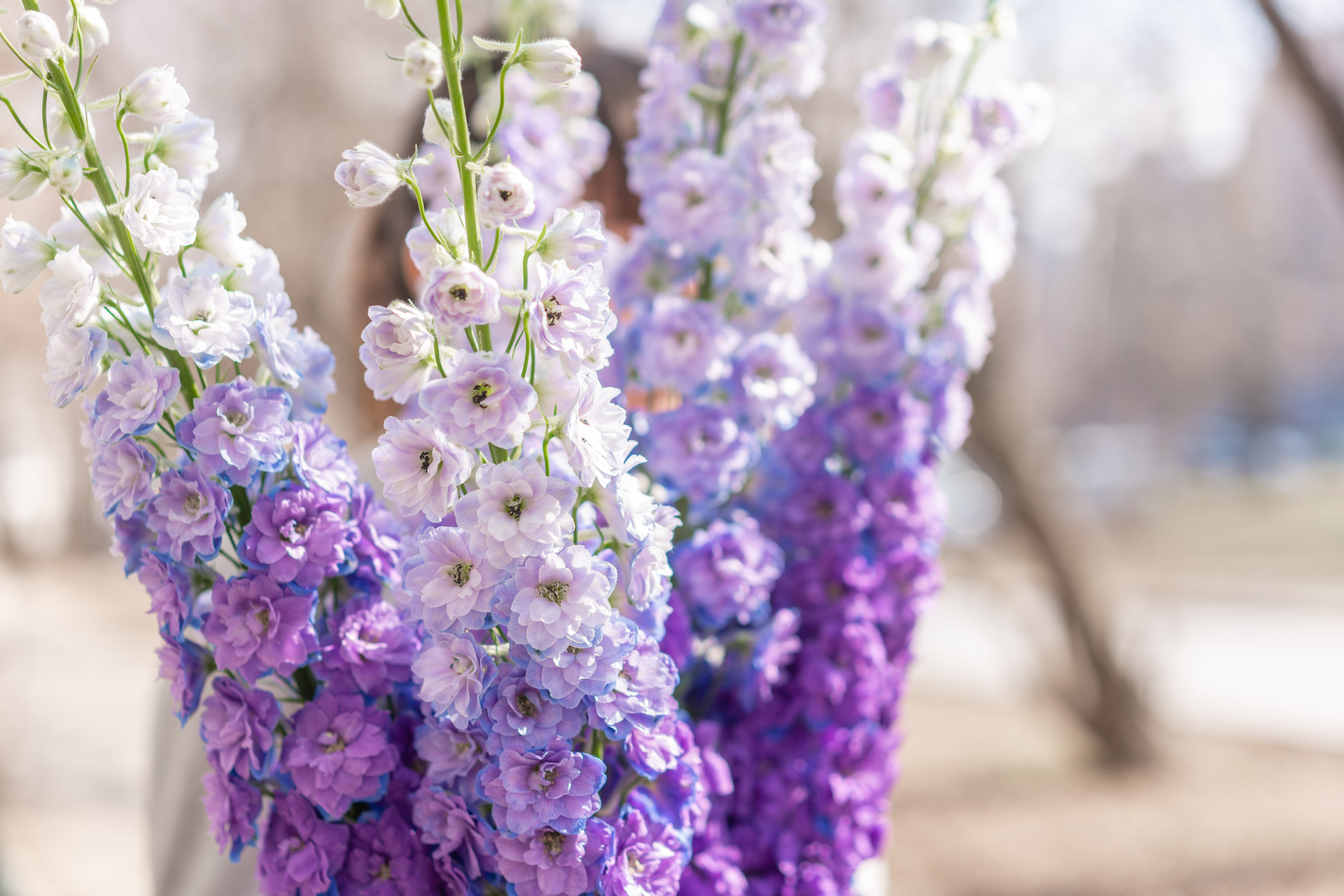 woman florist holds a bouquet of delphinium. gradient flowers from lilac to purple