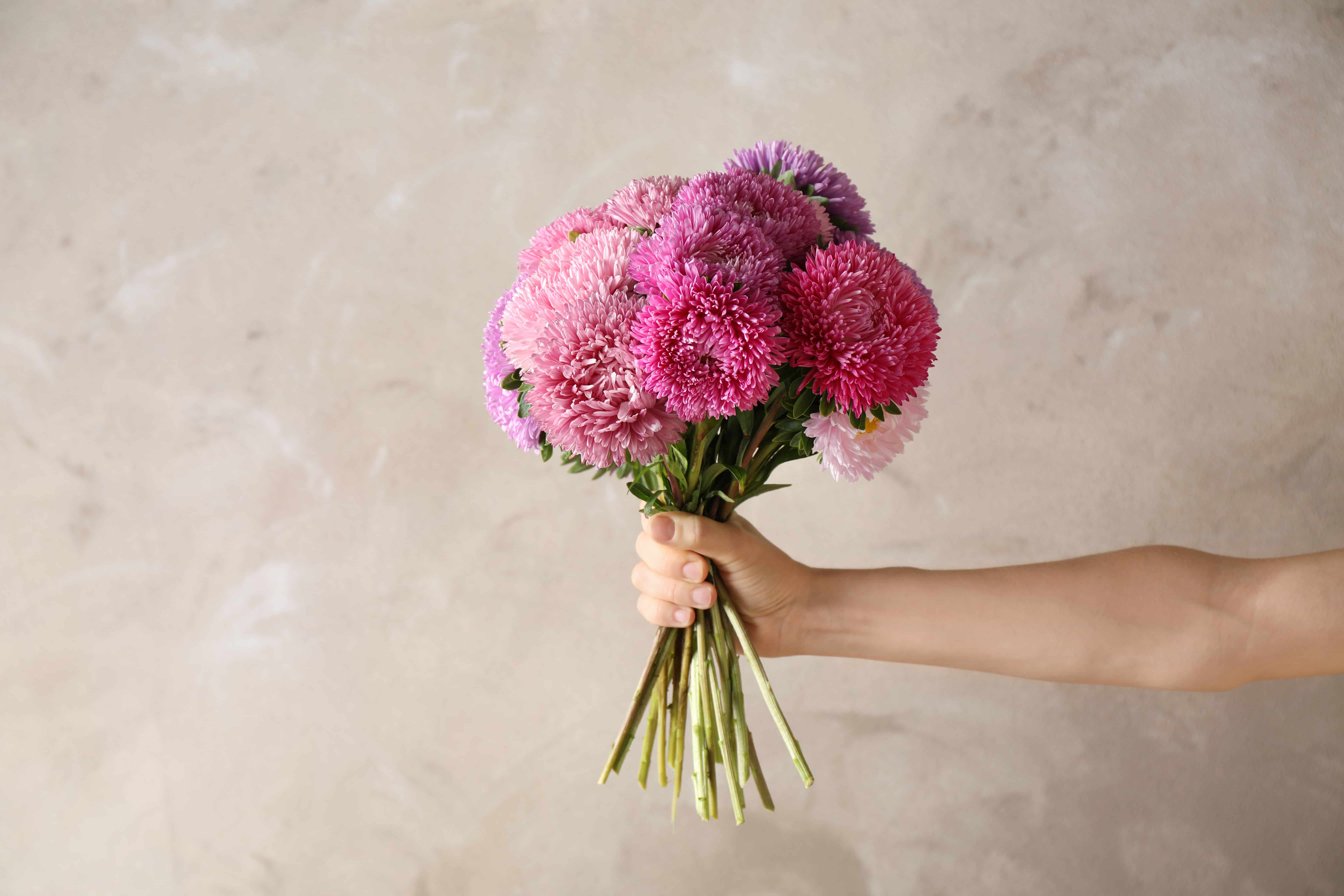 Woman holding bouquet of beautiful aster flowers on beige background, closeup