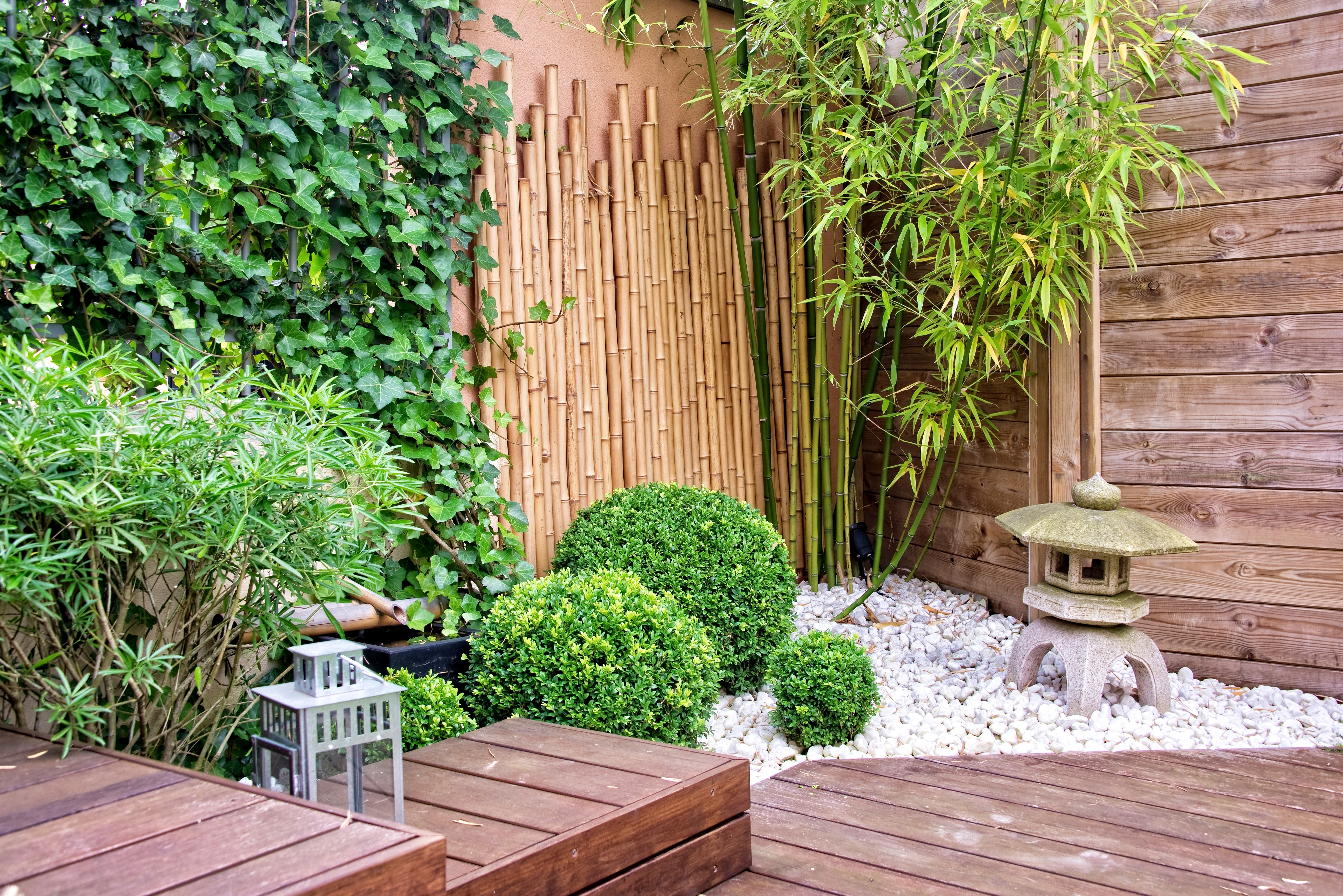 Japanese garden with bamboos and stone lantern
