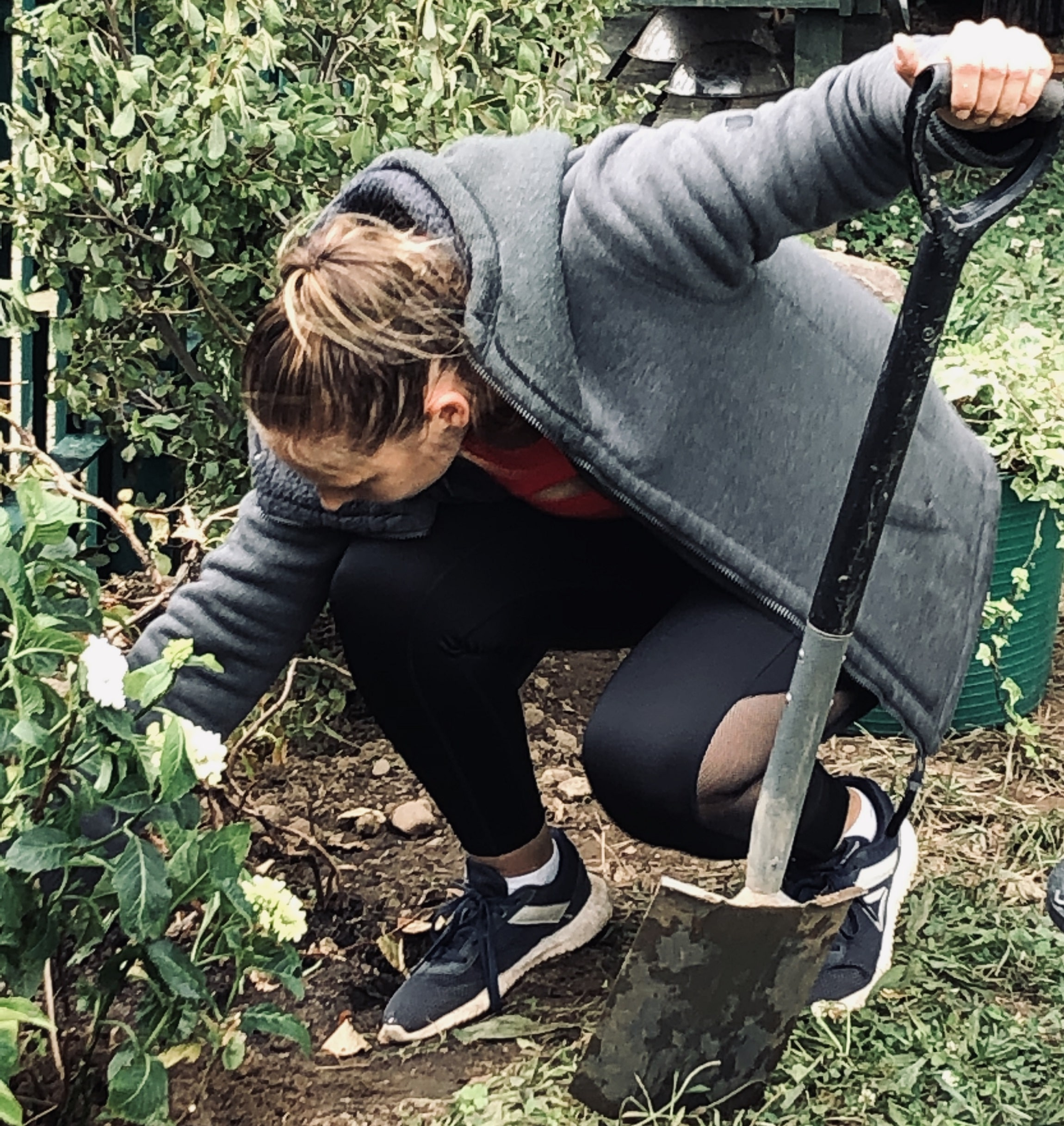 Sarah-planting-Hydrangea