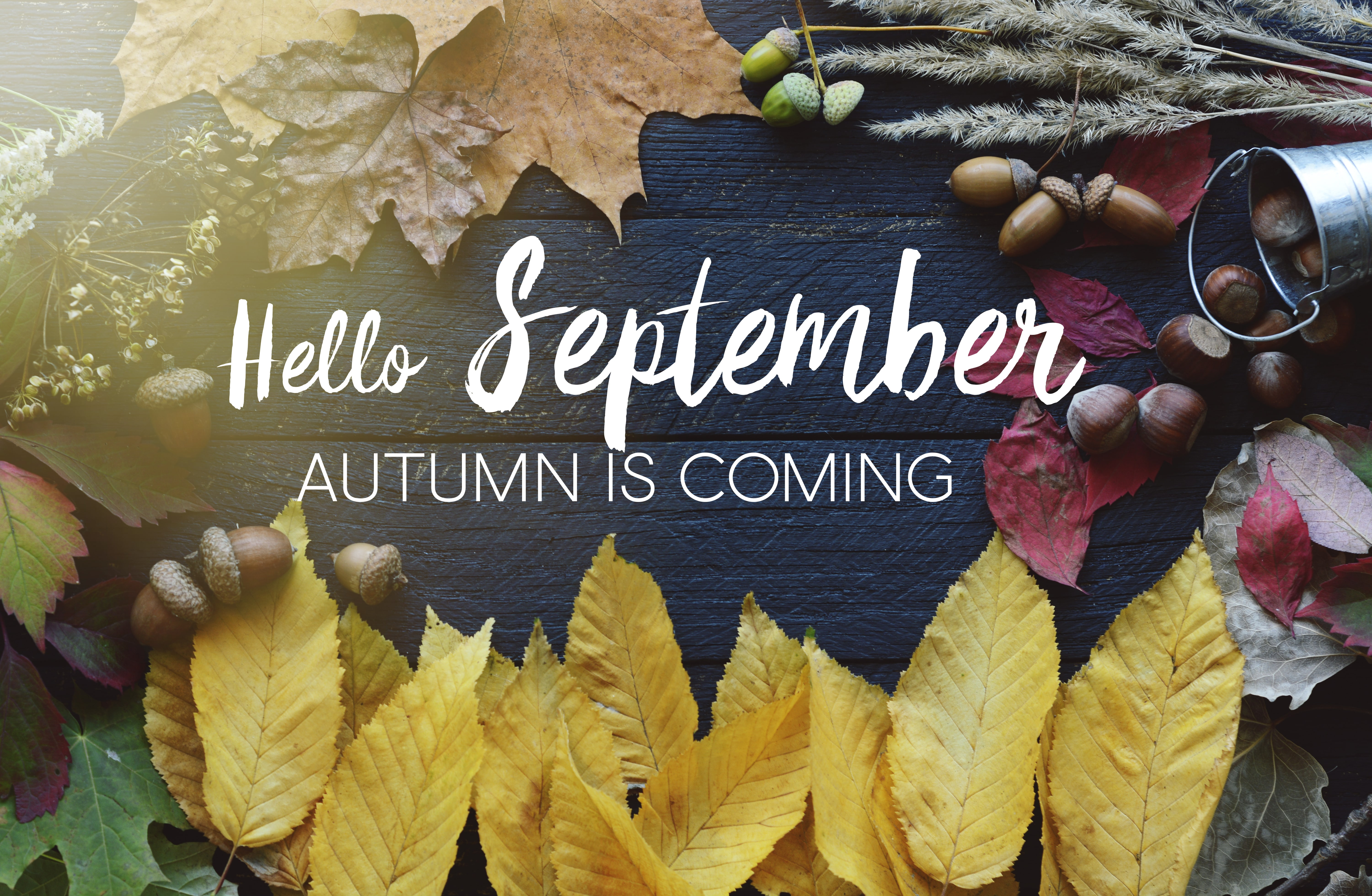 hello September card, Autumn composition from leaf, vintage style