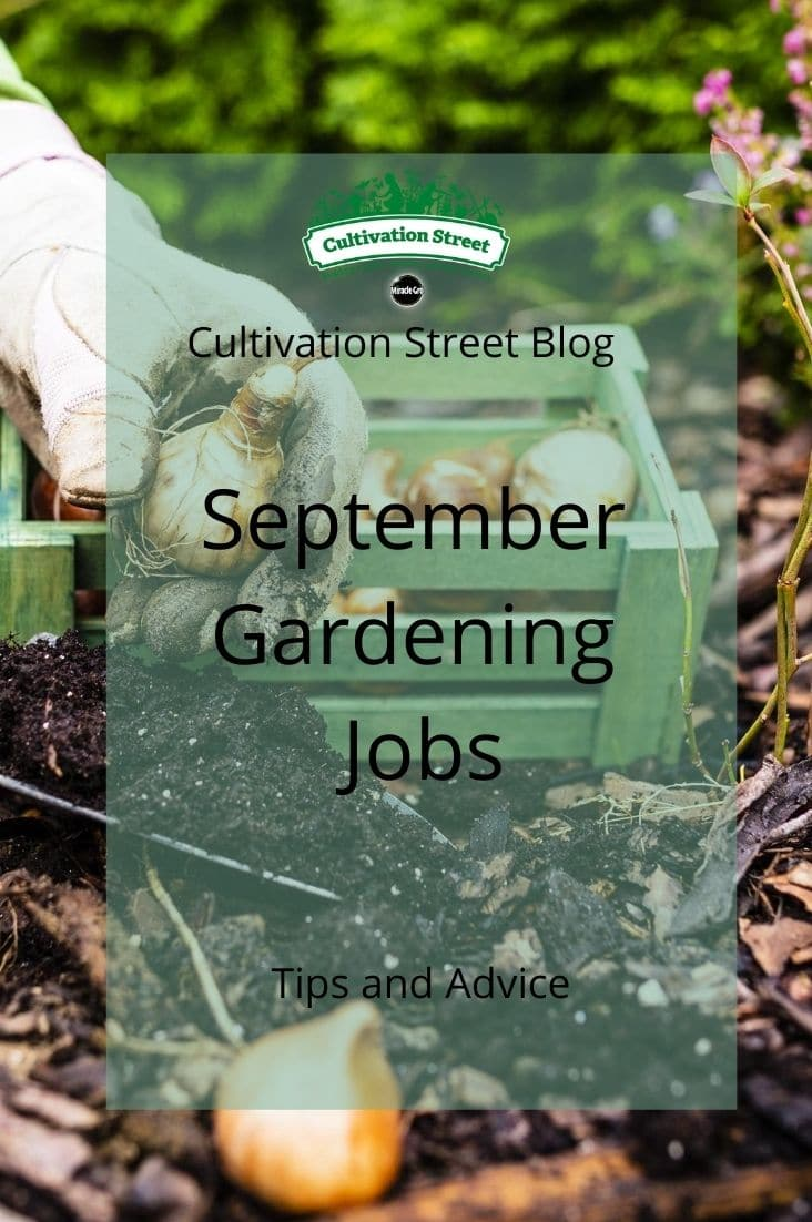 CultivationStreet Blog (3)