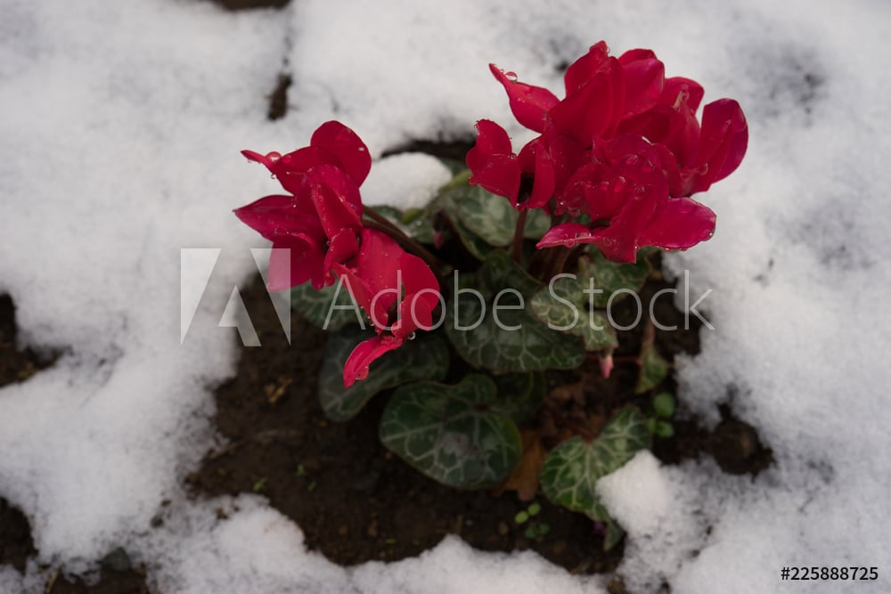 AdobeStock_225888725_Preview