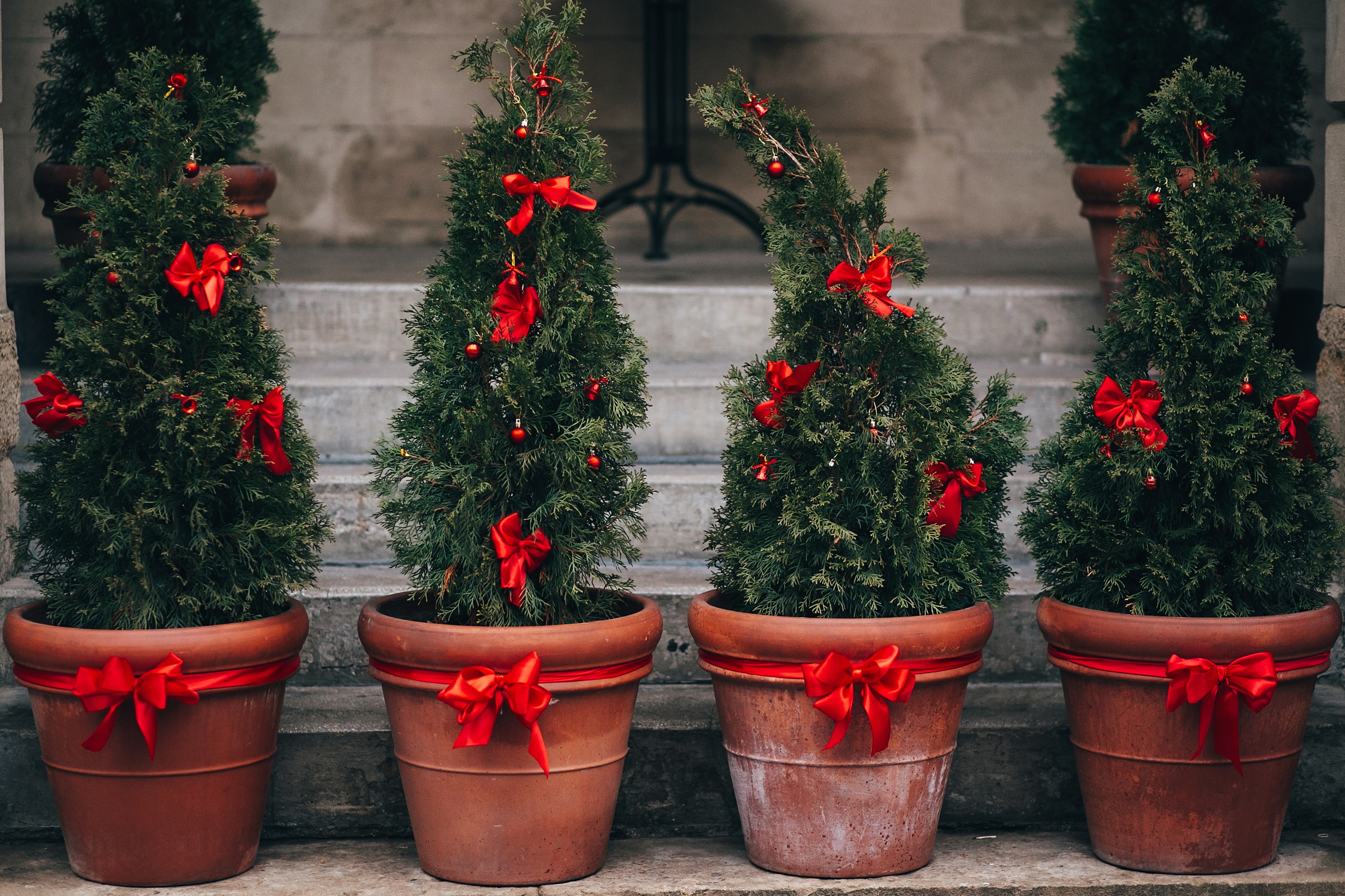 Stylish christmas street decorations, green fir branches with red bows on christmas trees in pots  in european city street. Festive decor and arrangements in city center, winter holidays