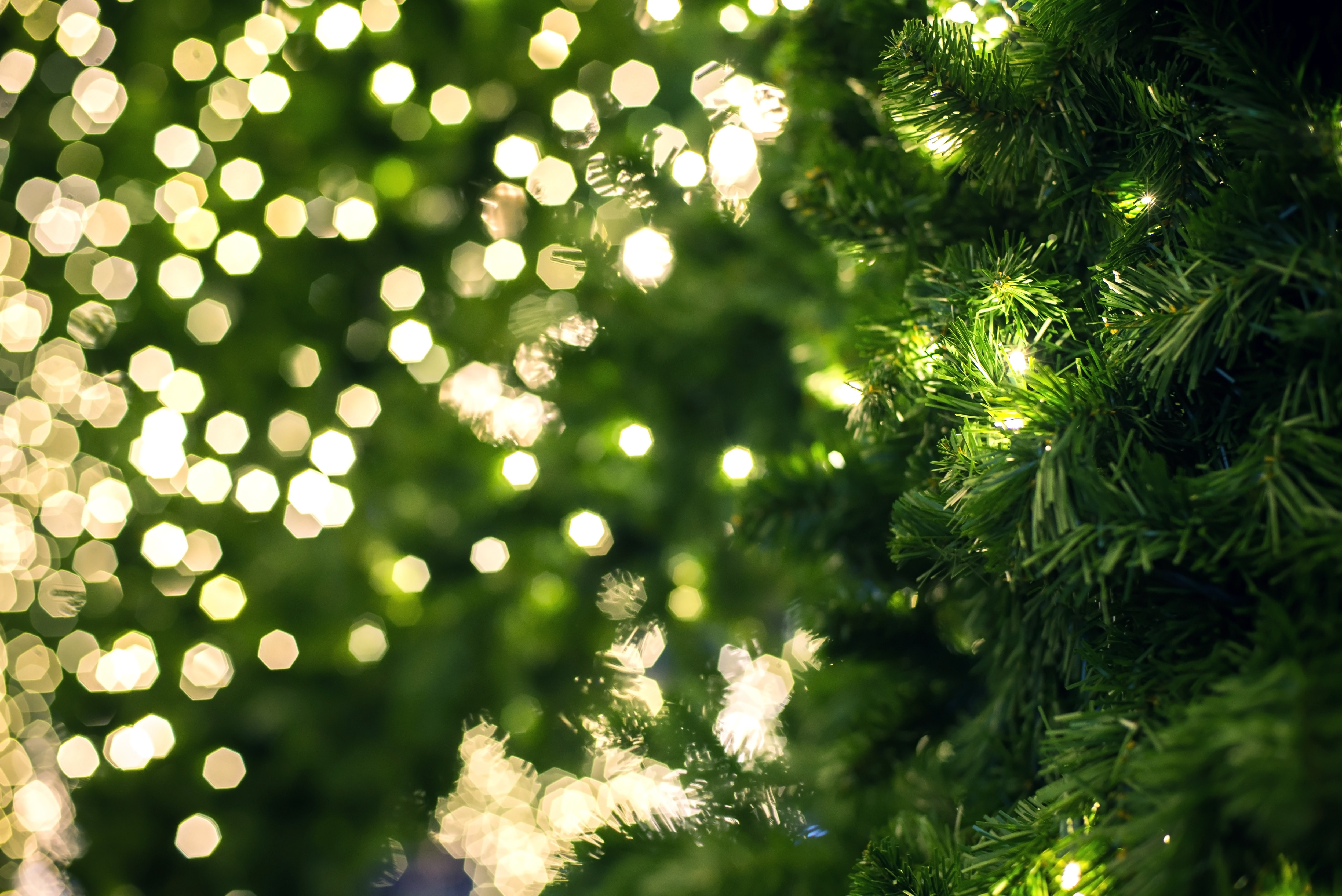 Close up of a green Christmas tree.