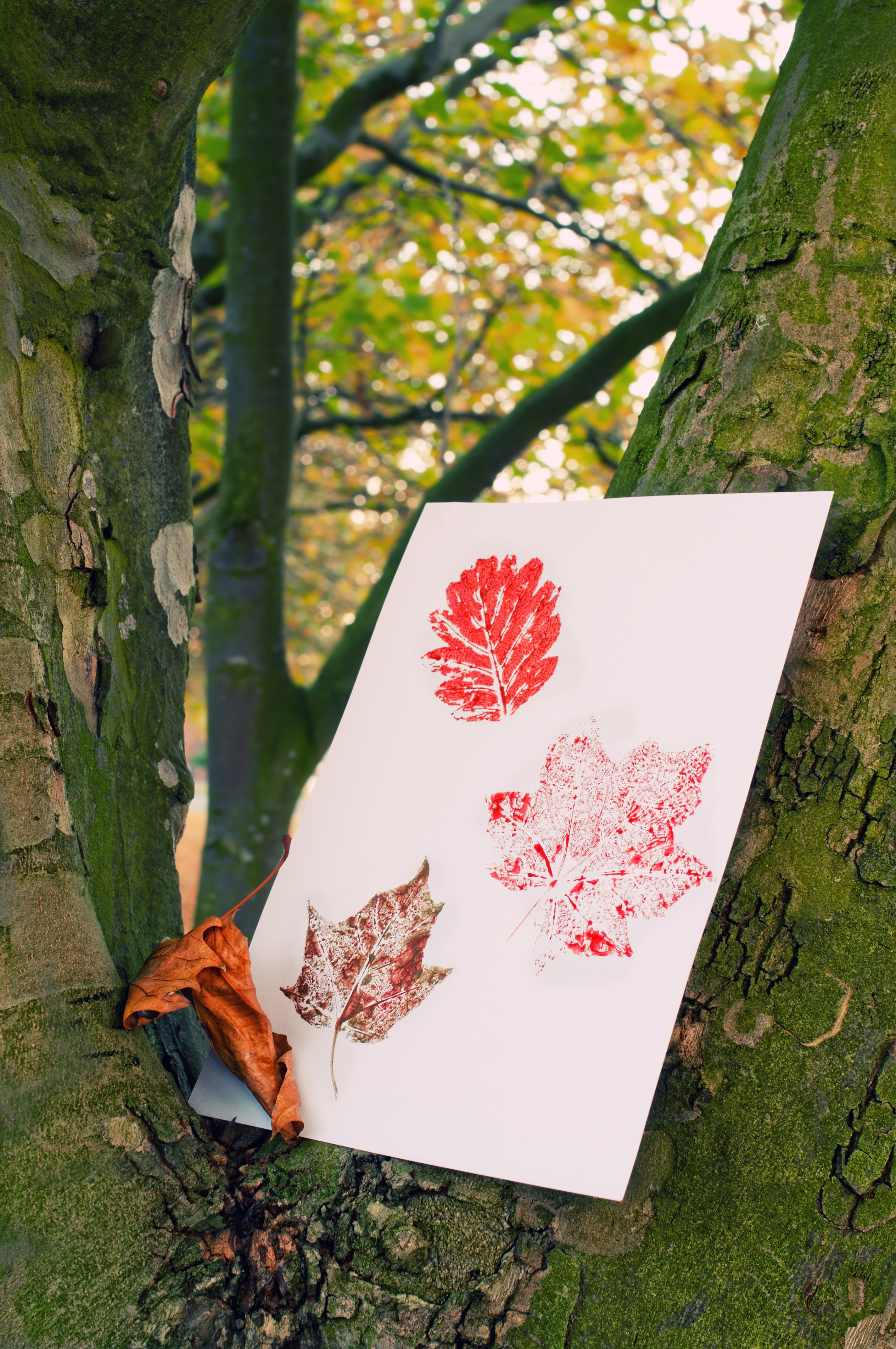 Autumn painted leaf prints in tree trunk
