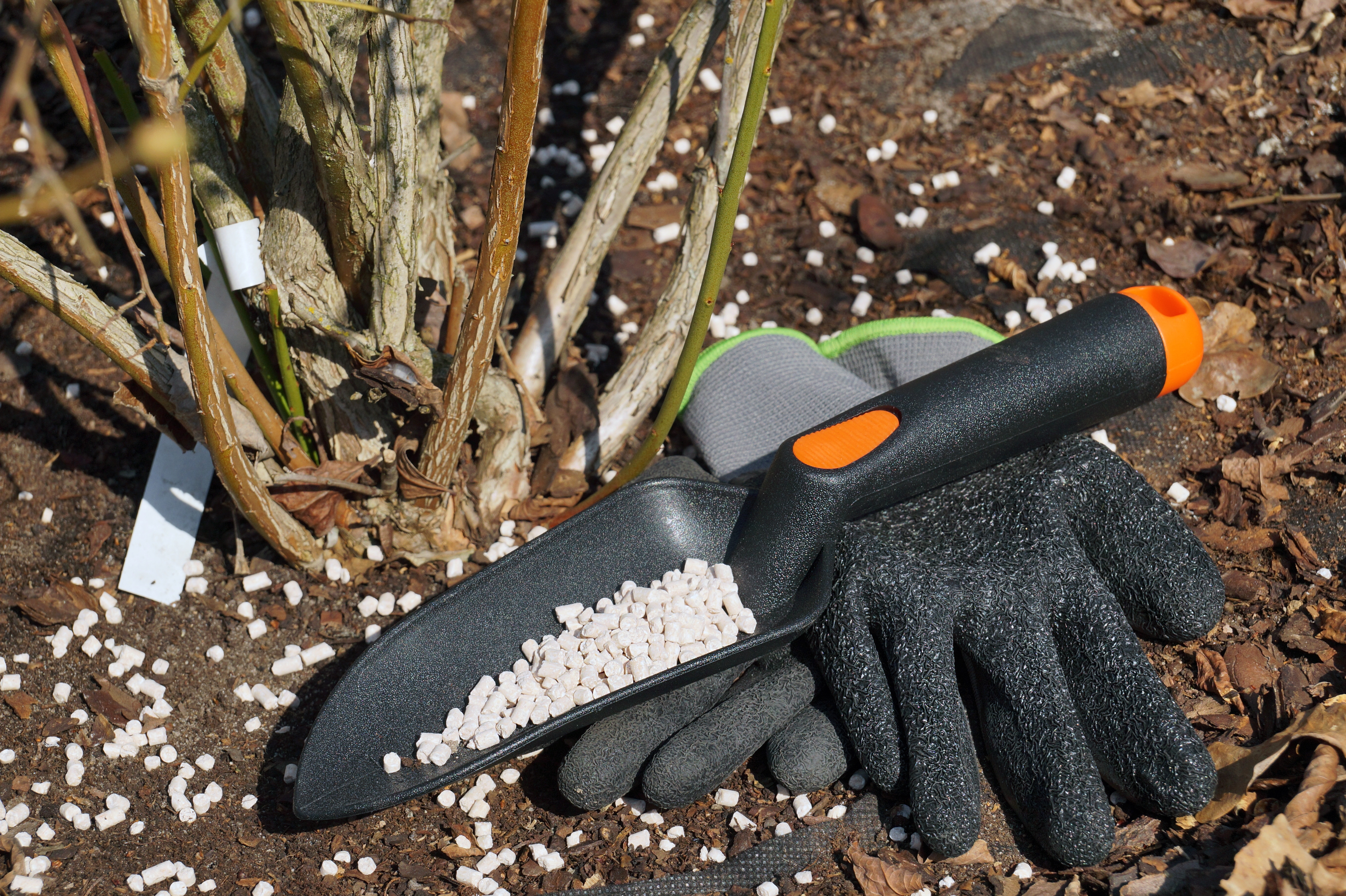 Prepared gloves and a spatula with fertilizer. Fertilizing shrubs in early spring before vegetation.