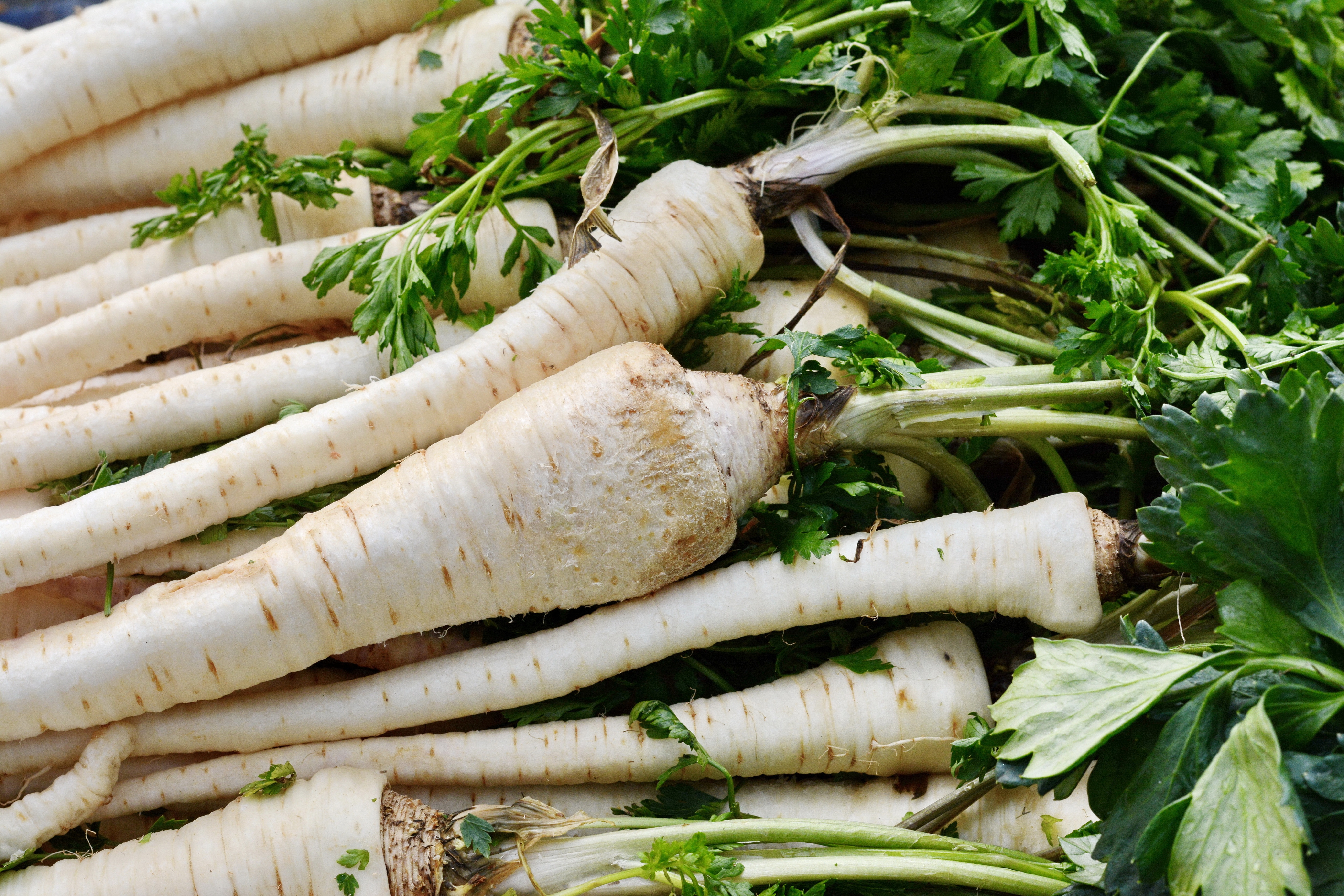 Fresh, parsnips at the weekly market. A bunch of parsnip. Full frame of vegetable.