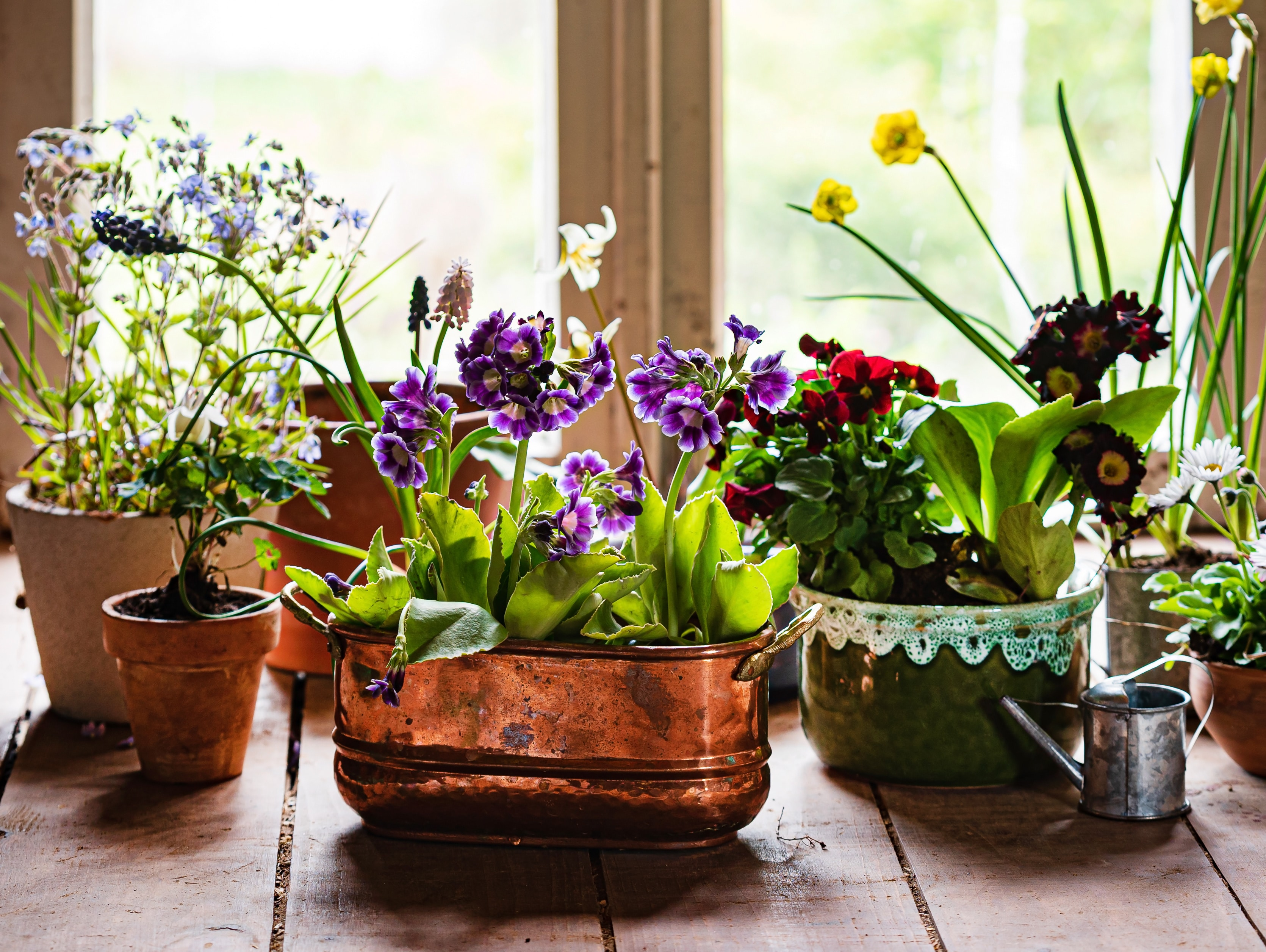 spring flowers in the pots