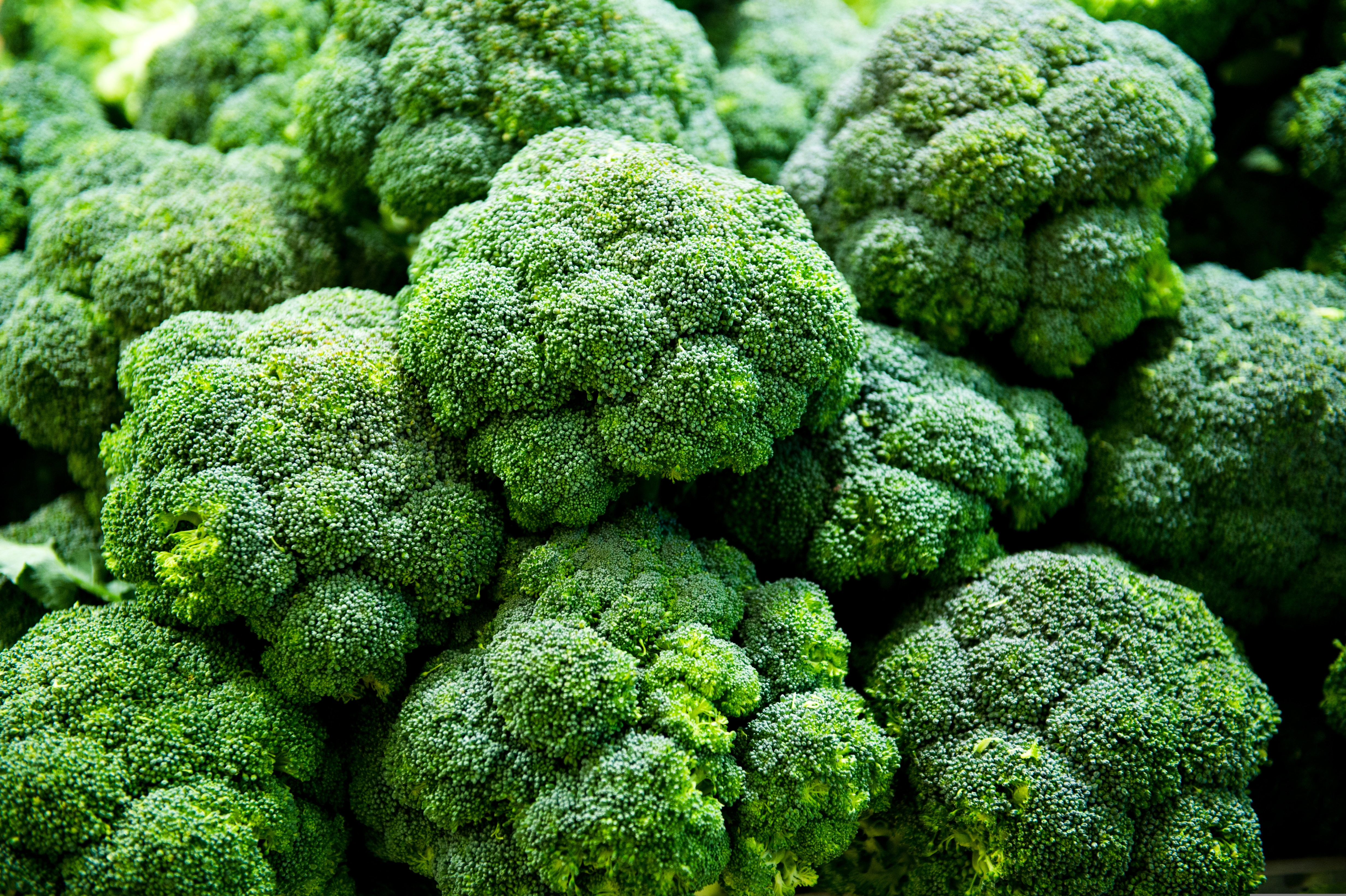 Group of fresh broccoli close up.