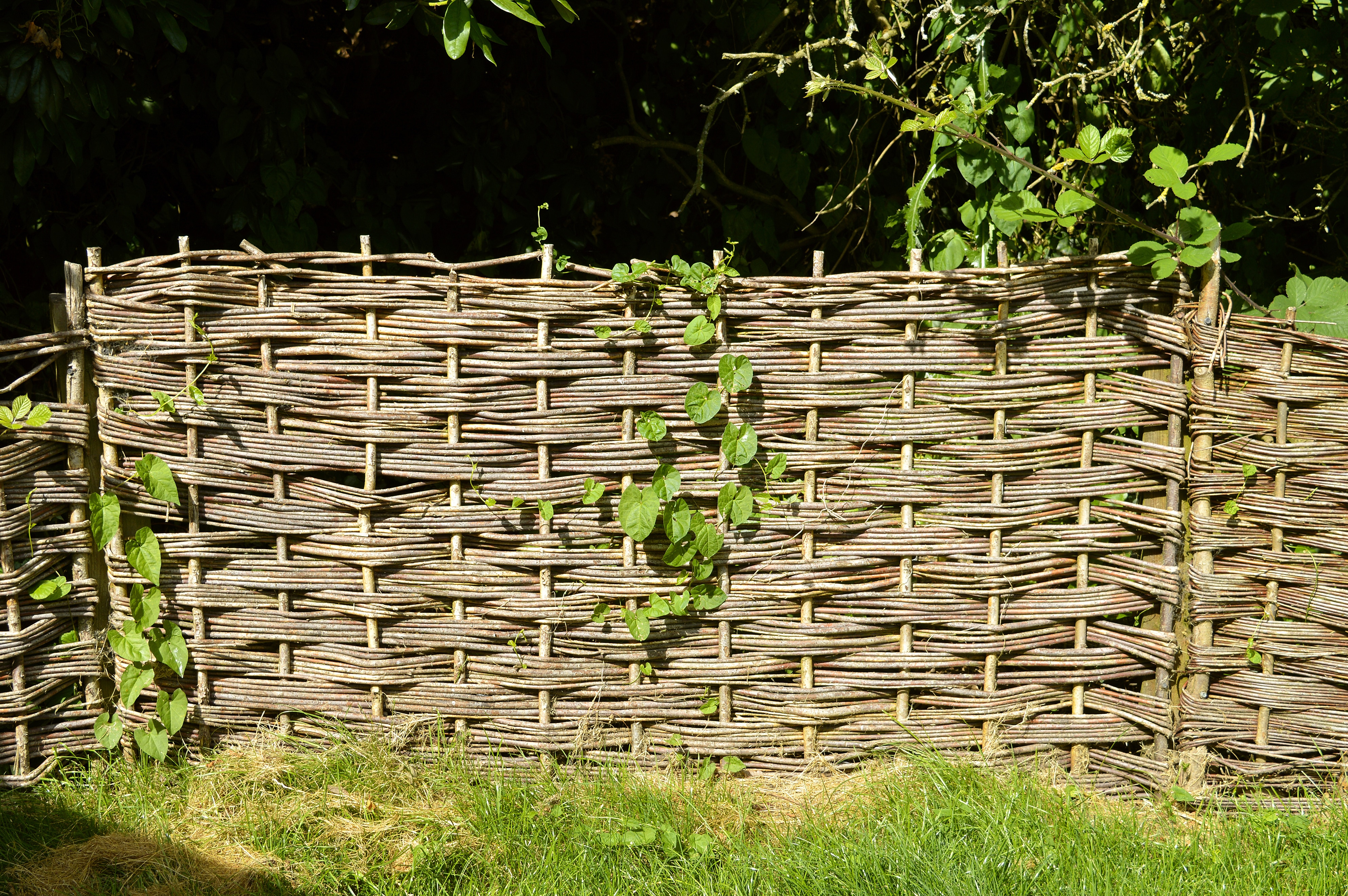 Wattle fences are lightweight construction material made by weaving thin branches