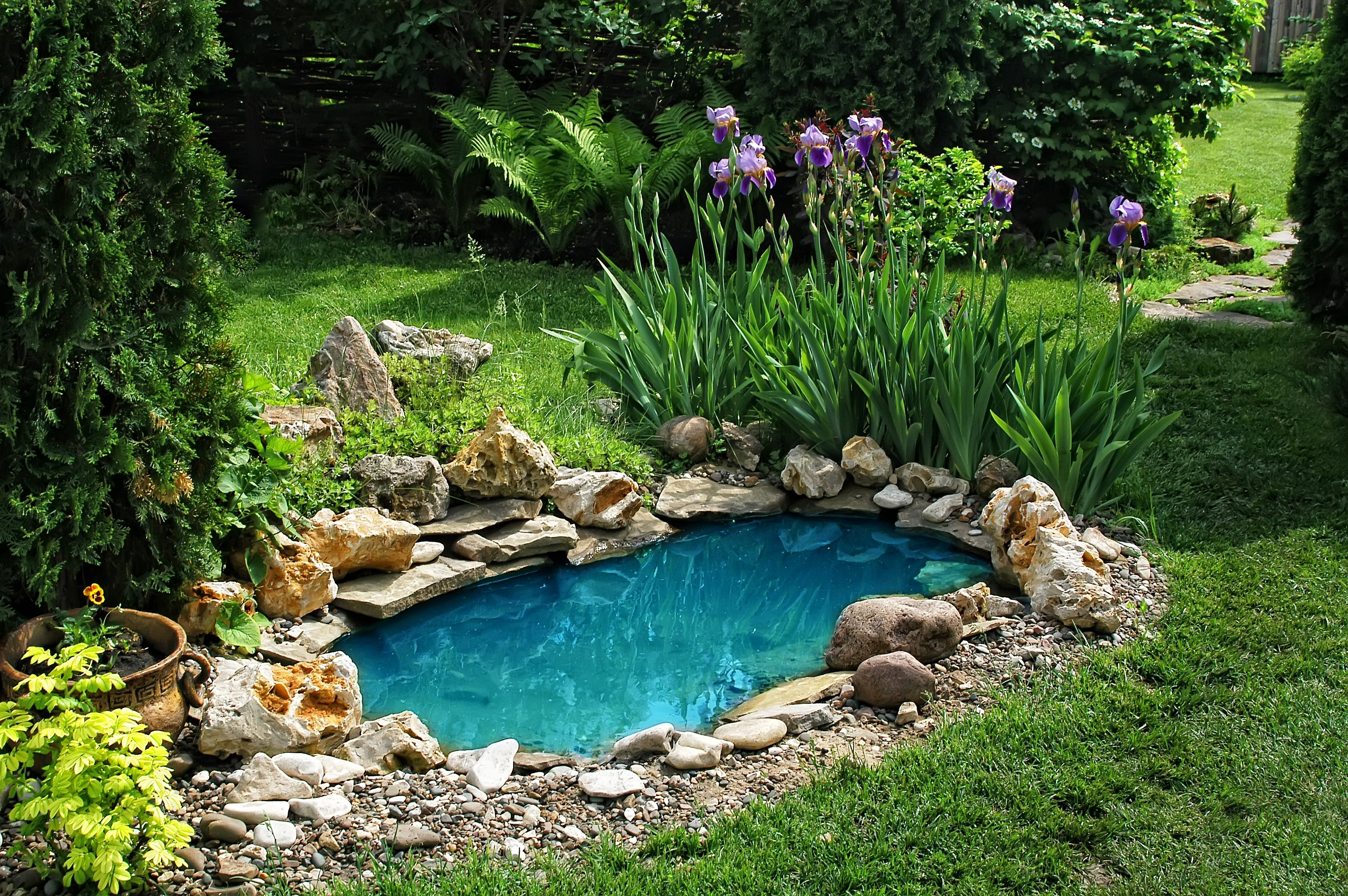 small pond on a summer day in the garden