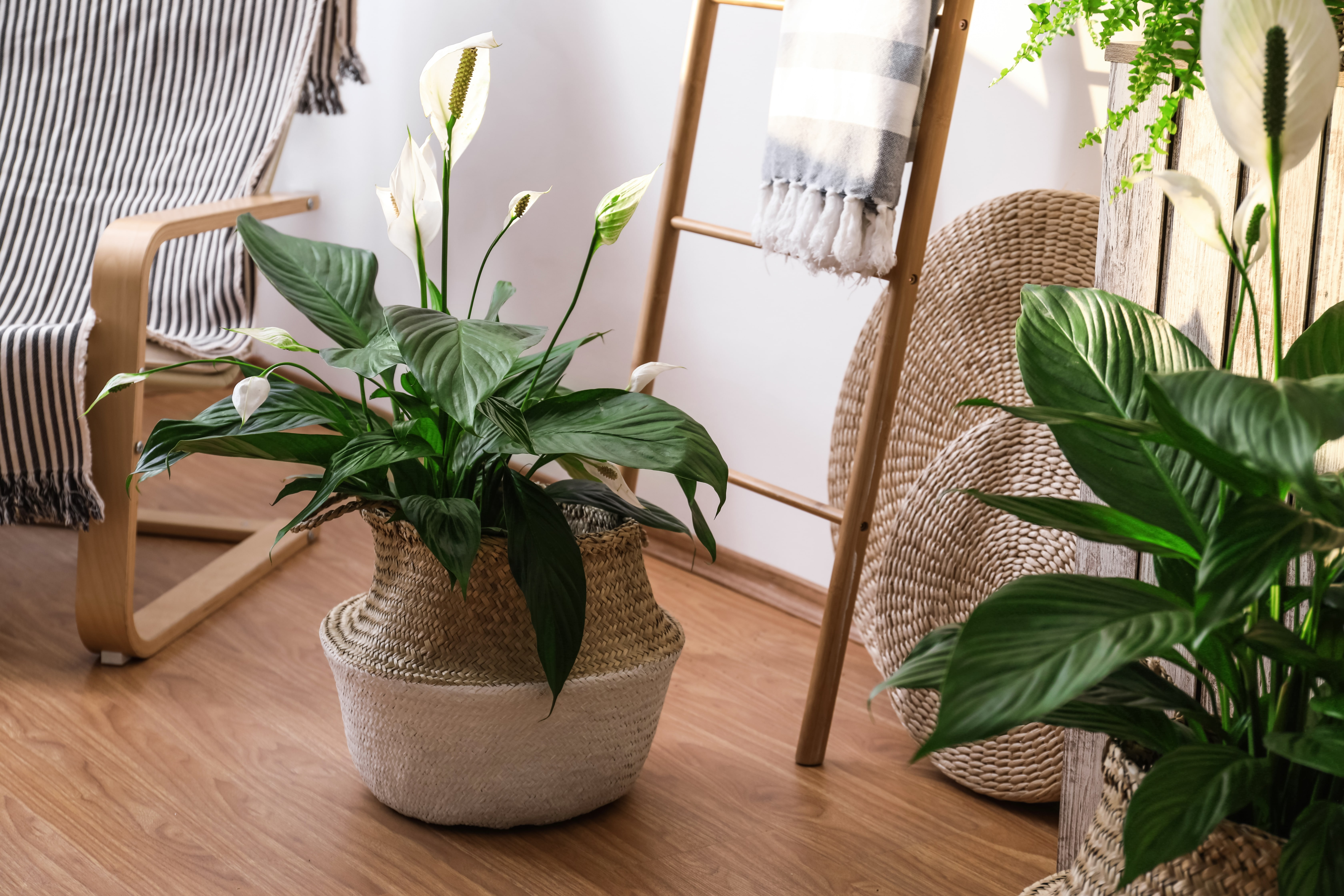 Beautiful potted plants in stylish room interior. Design elements