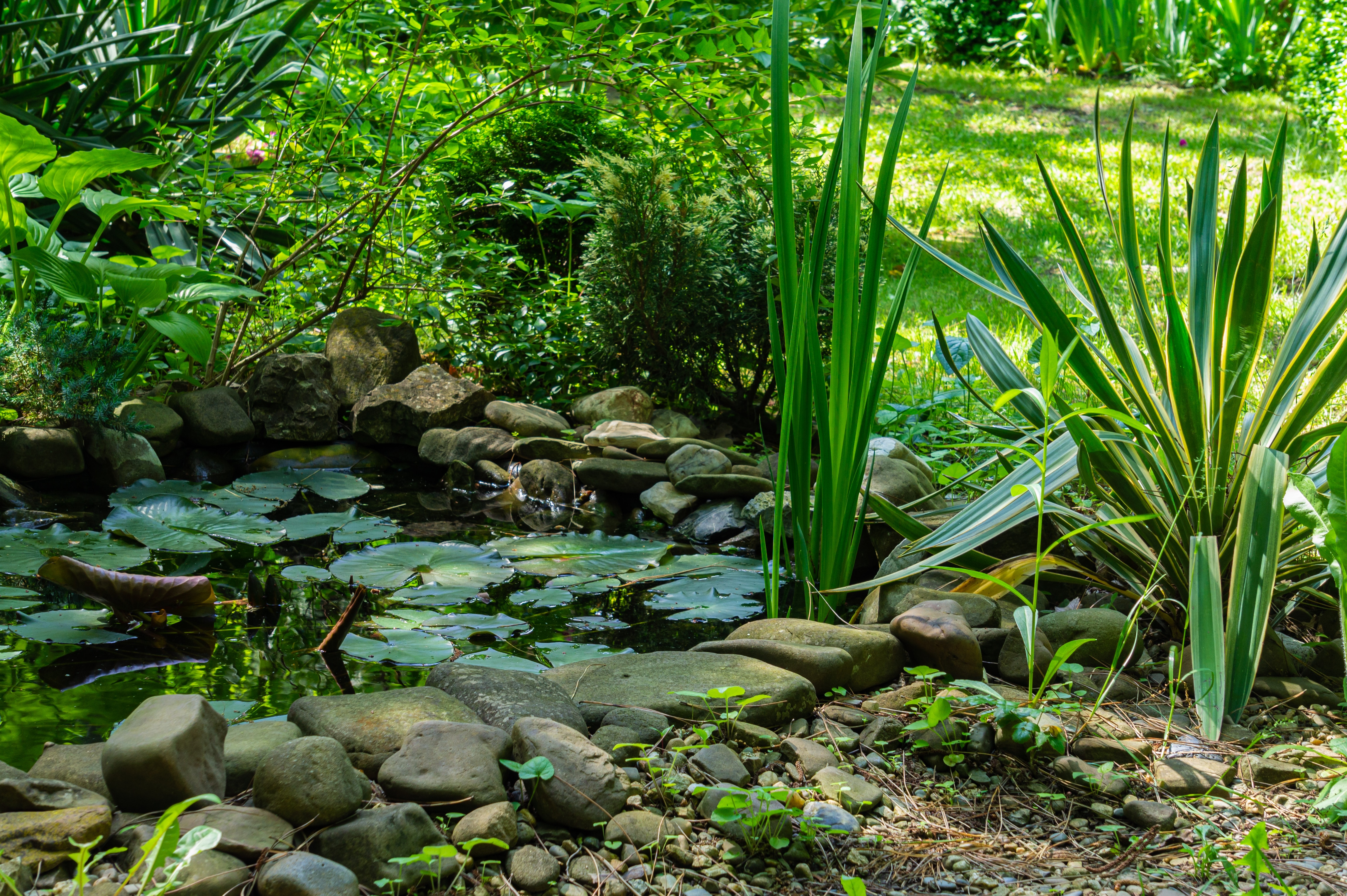 Beautiful small garden pond with stone shores in the spring. On shore among stones, striped yucca of Gloriosa Variegata grows. Selective focus. Nature concept for design.