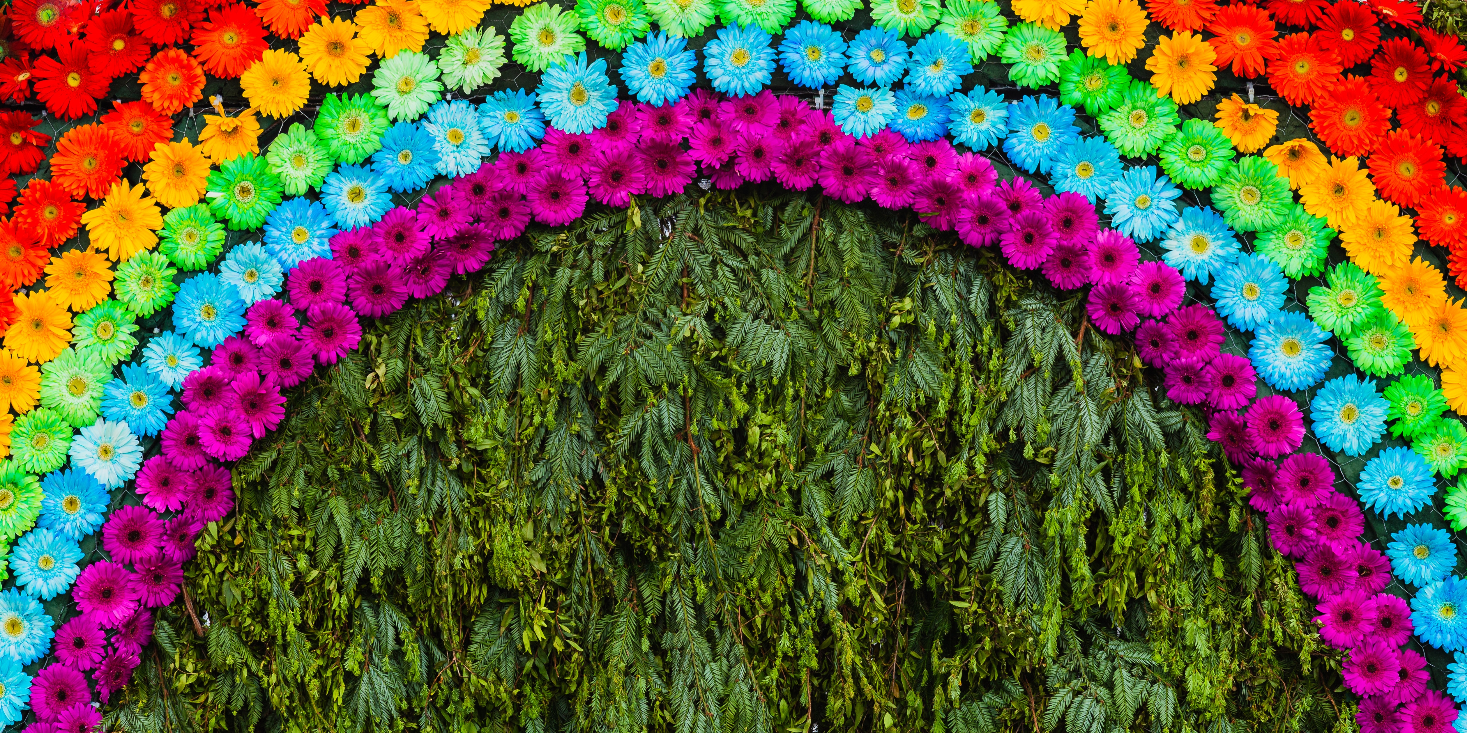 Floral rainbow made with purple, blue, green, yellow, orange and red daisy gerbera flower in Madeira Flower Festival, Madeira island, Portugal