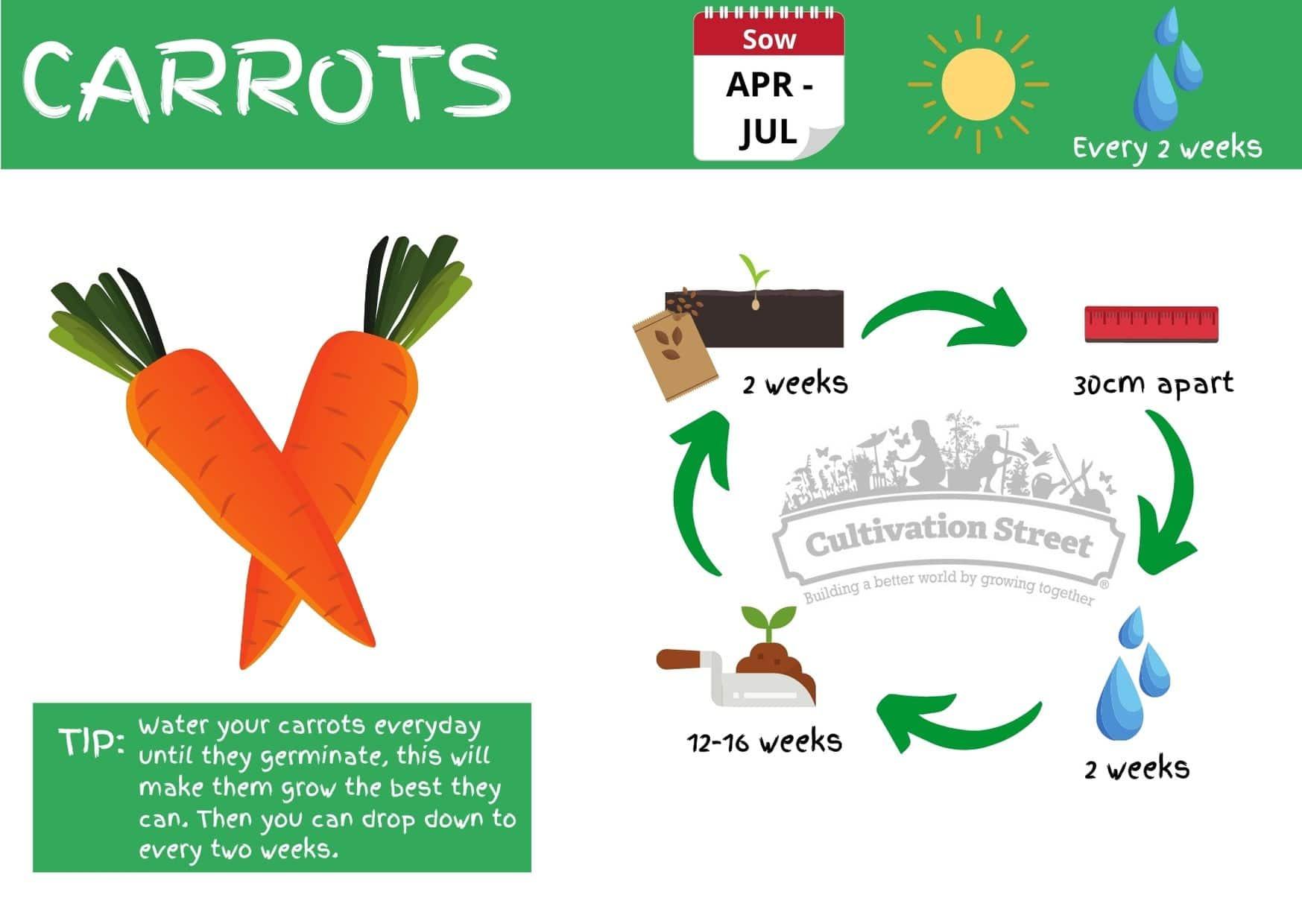 Carrot JPG