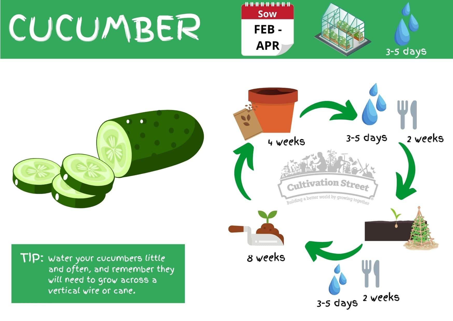 Cucumber JPG