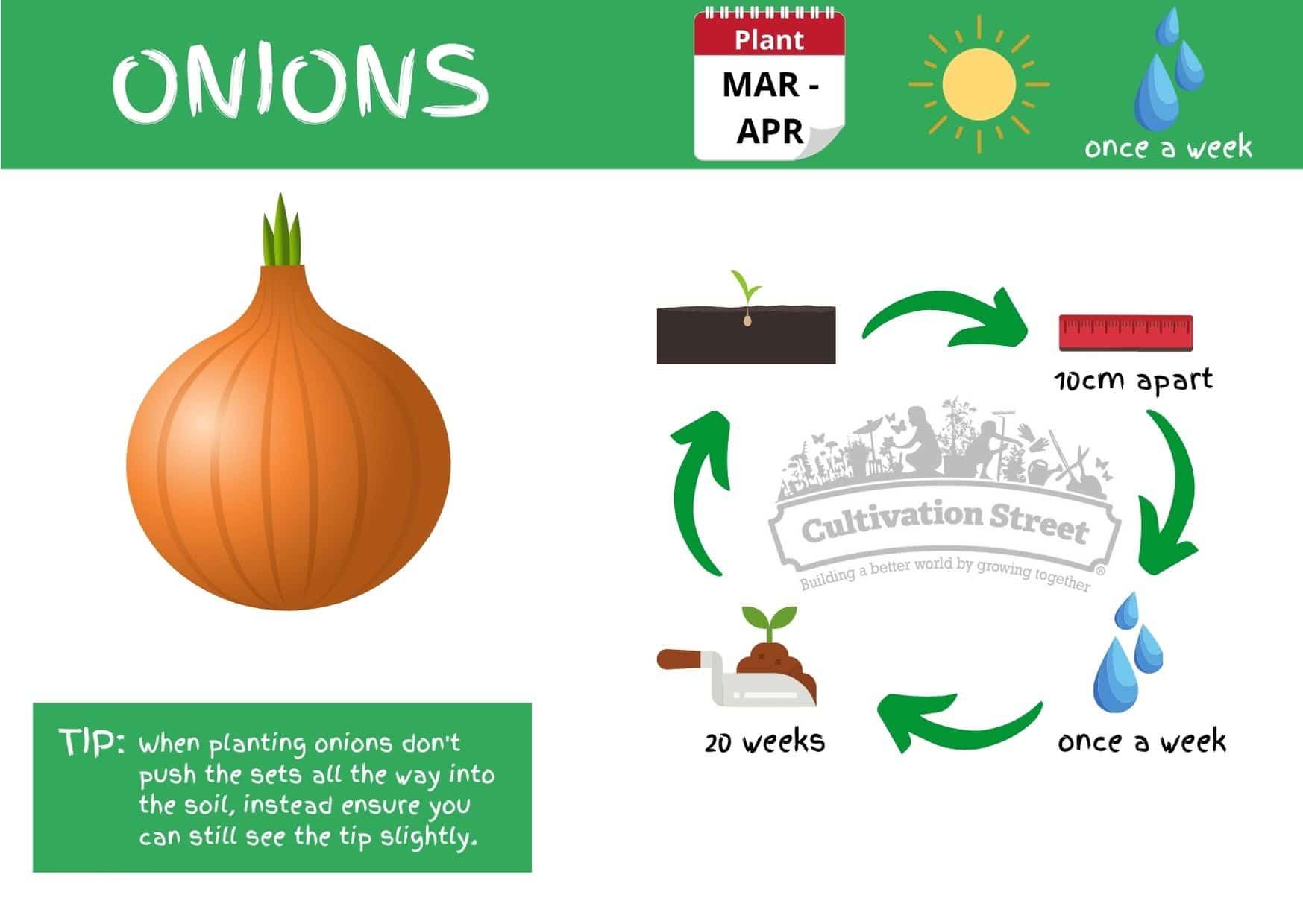 Onions JPG