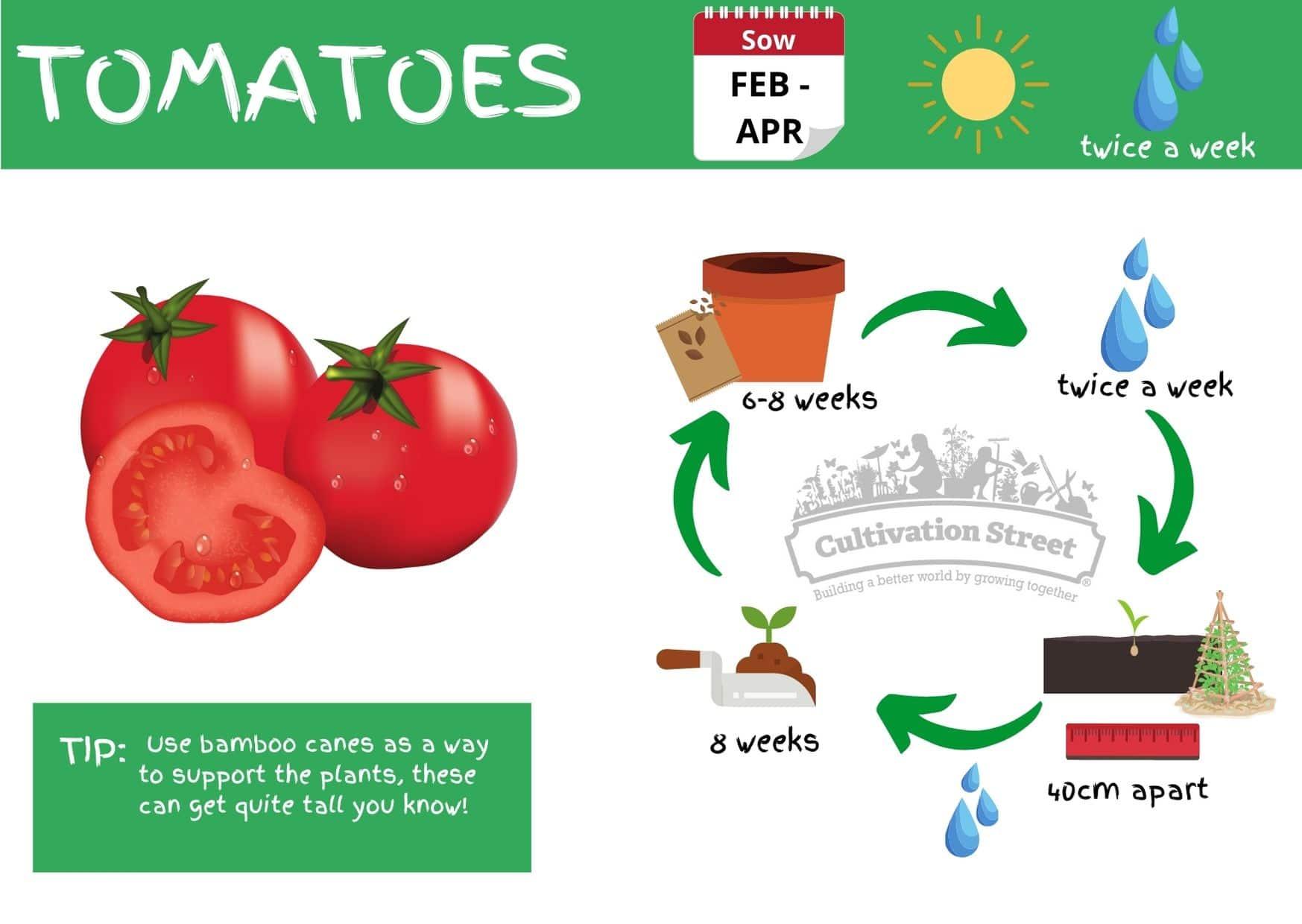 Tomato JPG