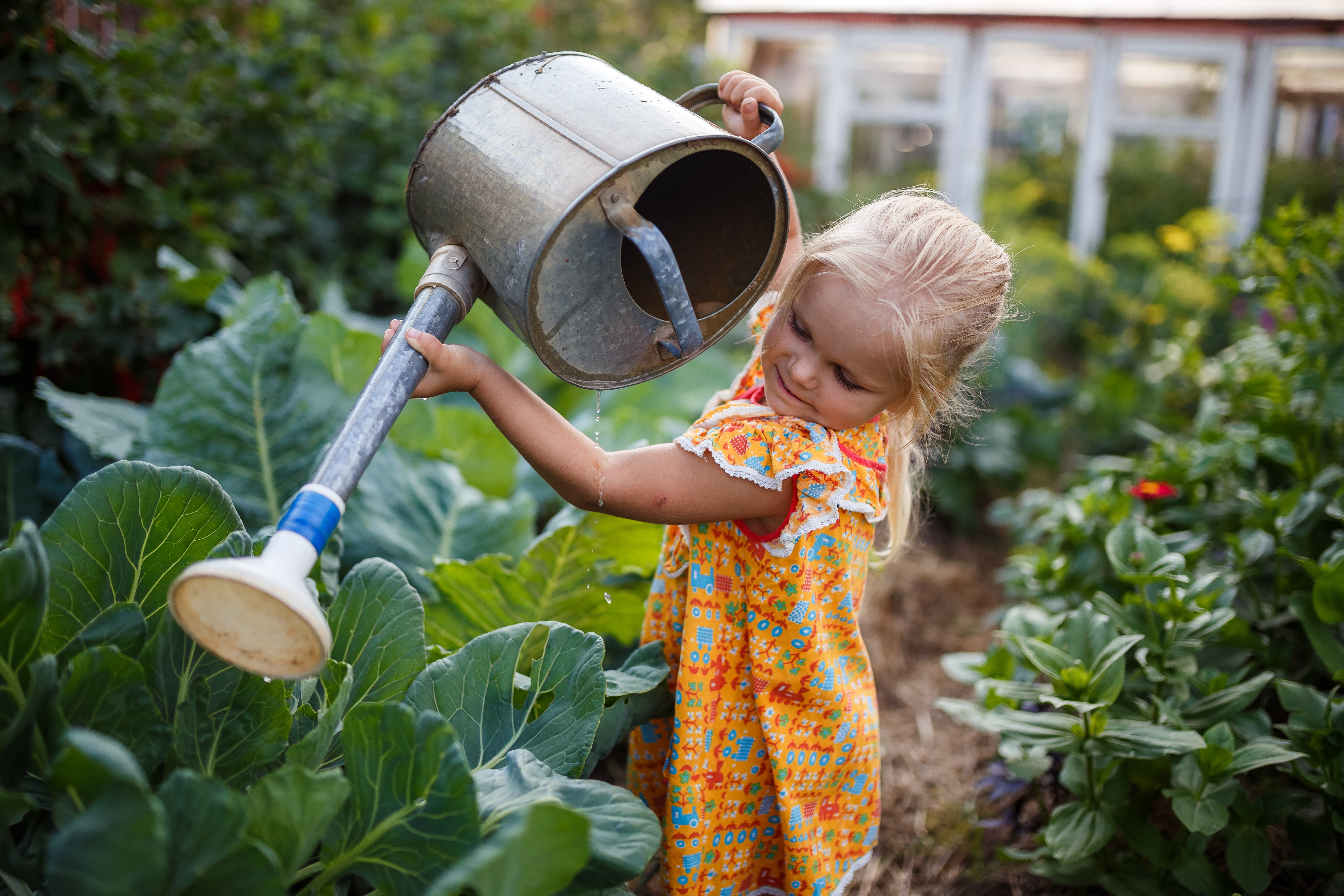 girl child in the garden watering plants, a small gardener, summer in the village