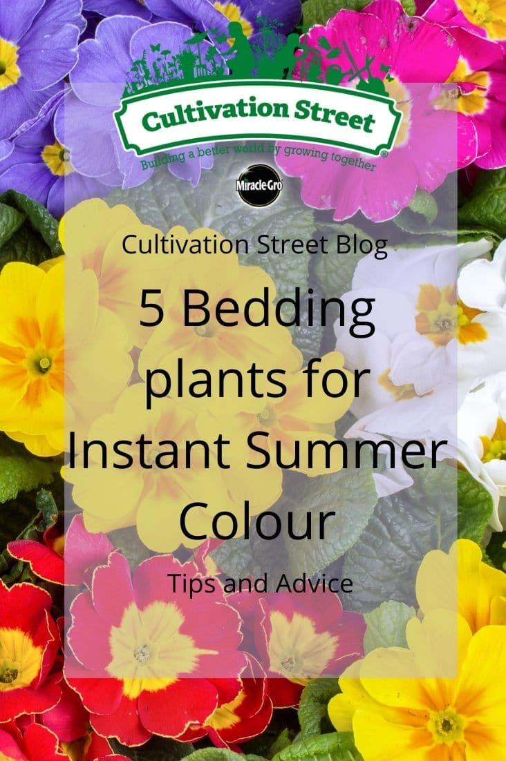CultivationStreet Blog (5)