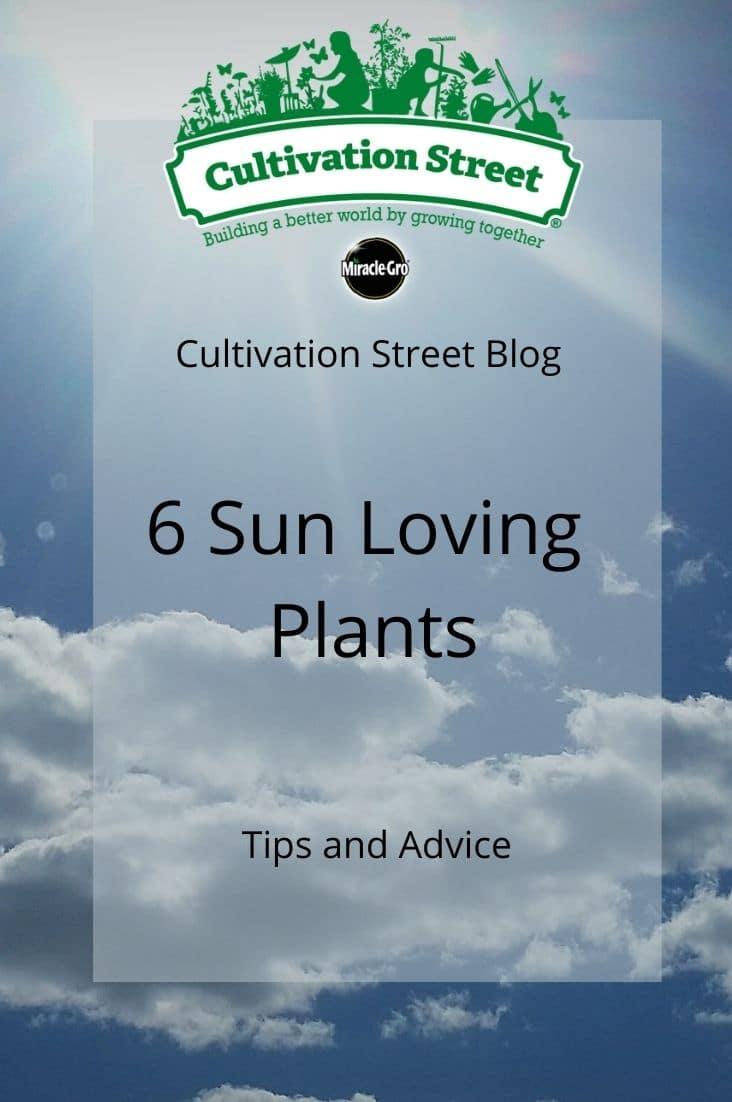 CultivationStreet Blog (4)